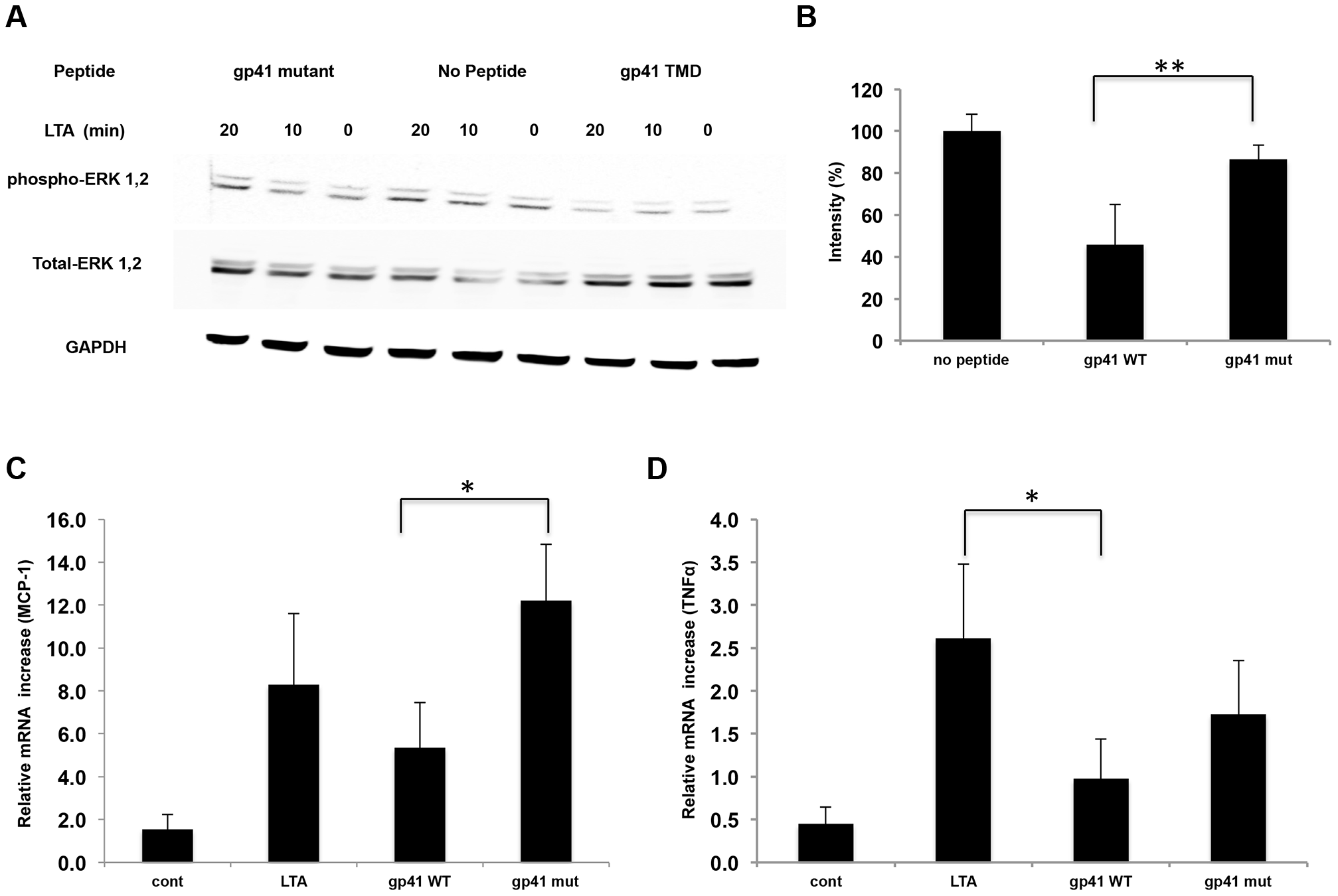 The gp41 TMD inhibits TLR2 induced signaling through ERK1,2 and cytokine secretion.
