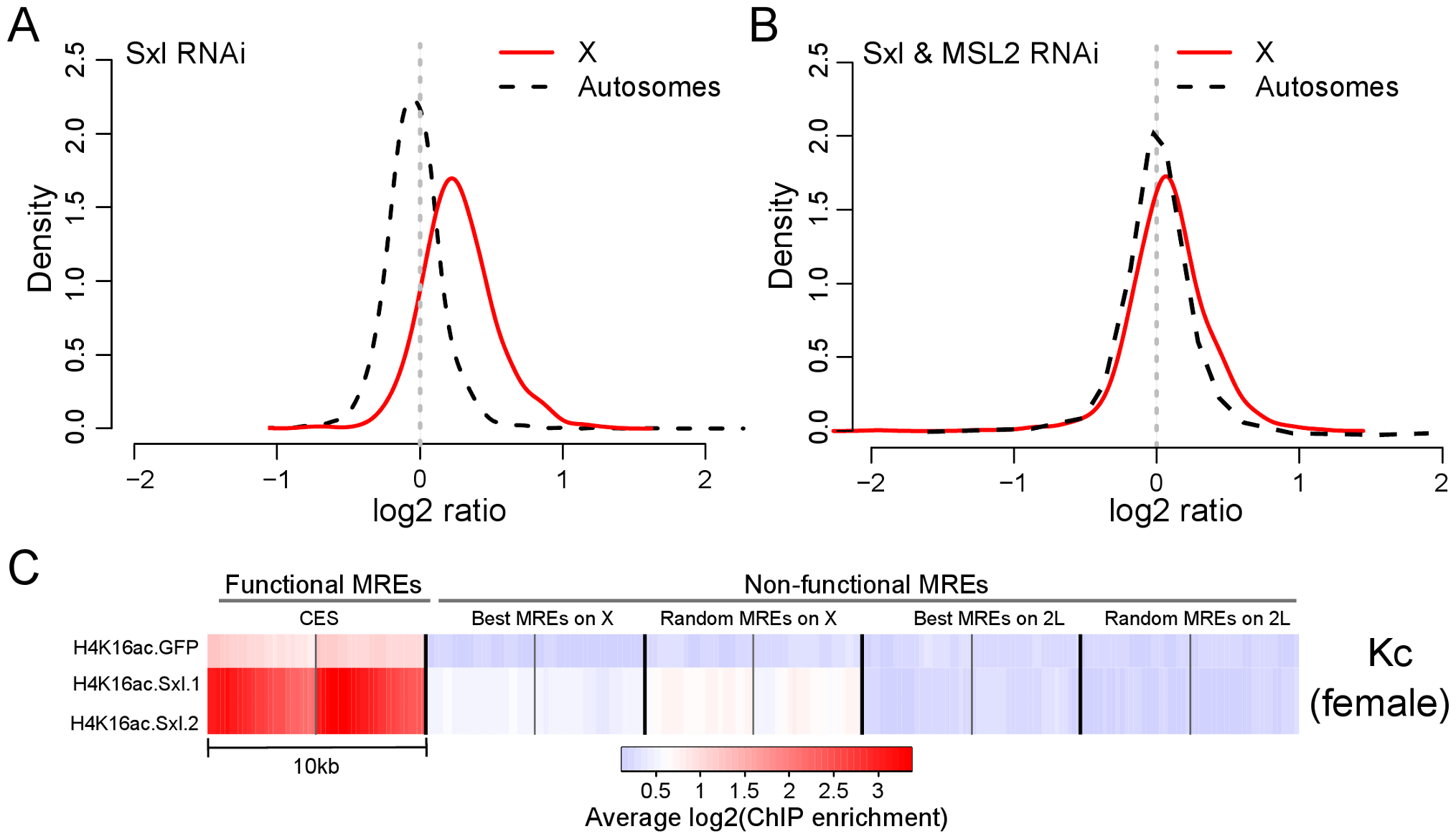 Ectopic upregulation of MSL2 by <i>Sxl</i> RNAi treatment induces dosage compensation of X-linked genes in female Kc cells by preferentially targeting MREs in an active chromatin context.