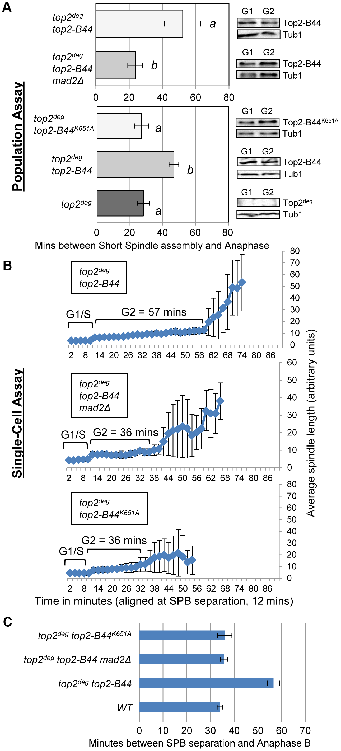 DNA-Associated Top2-B44 Activates a Mad2-Dependent G2/M Checkpoint.