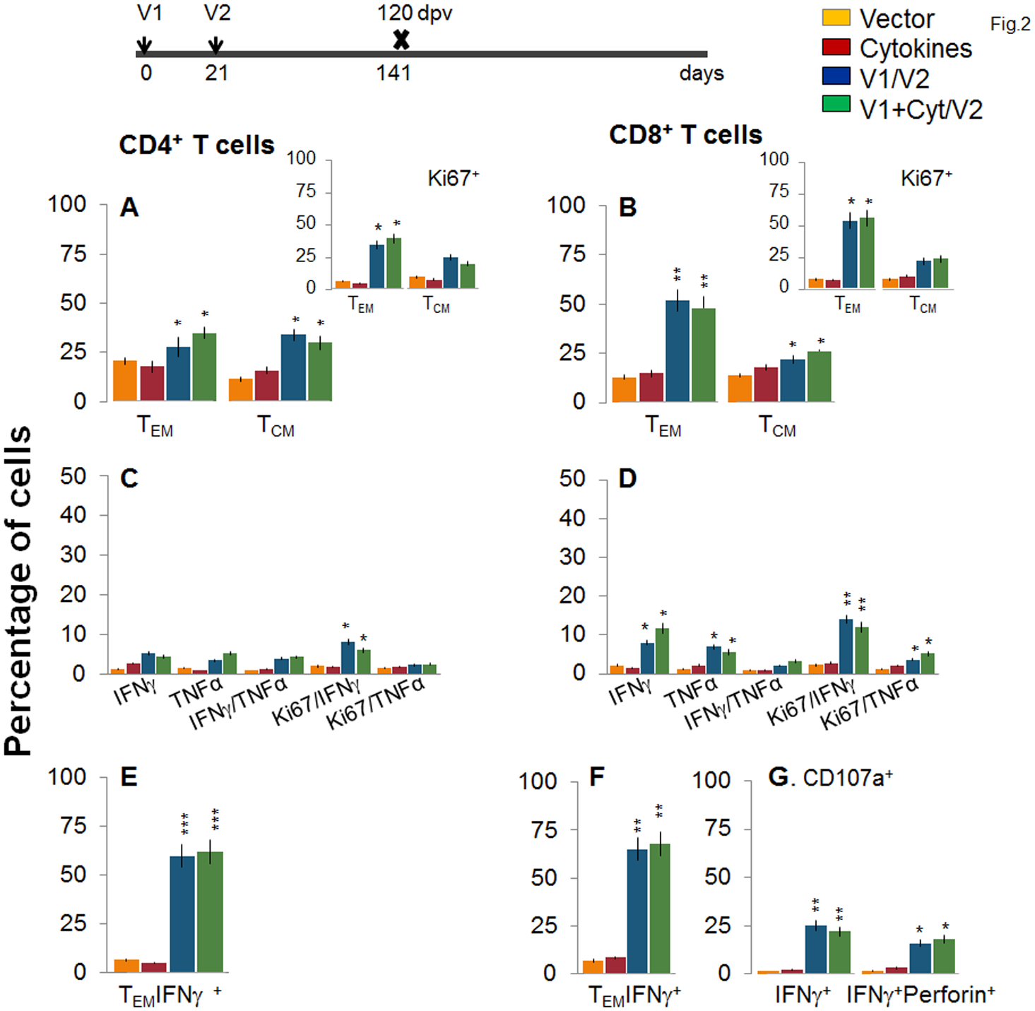 Stability and effector phenotype of D/P vaccine elicited T cells in mice.