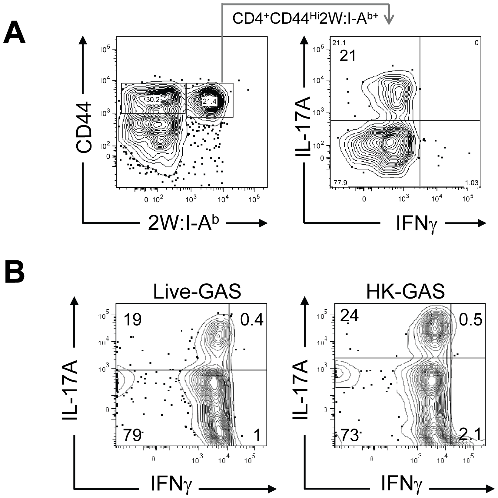 Primary intranasal GAS infection induces a Th17 response.