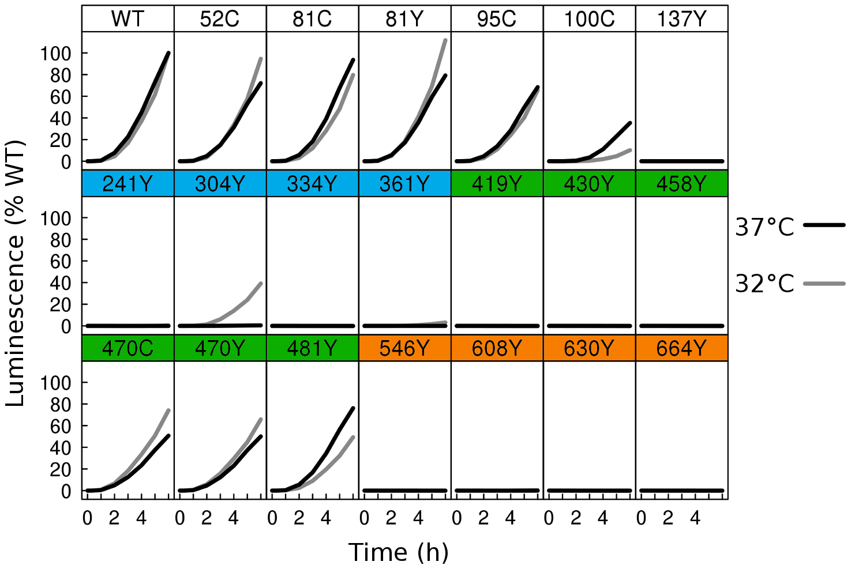 Fusion activity by dual split luciferase assay.