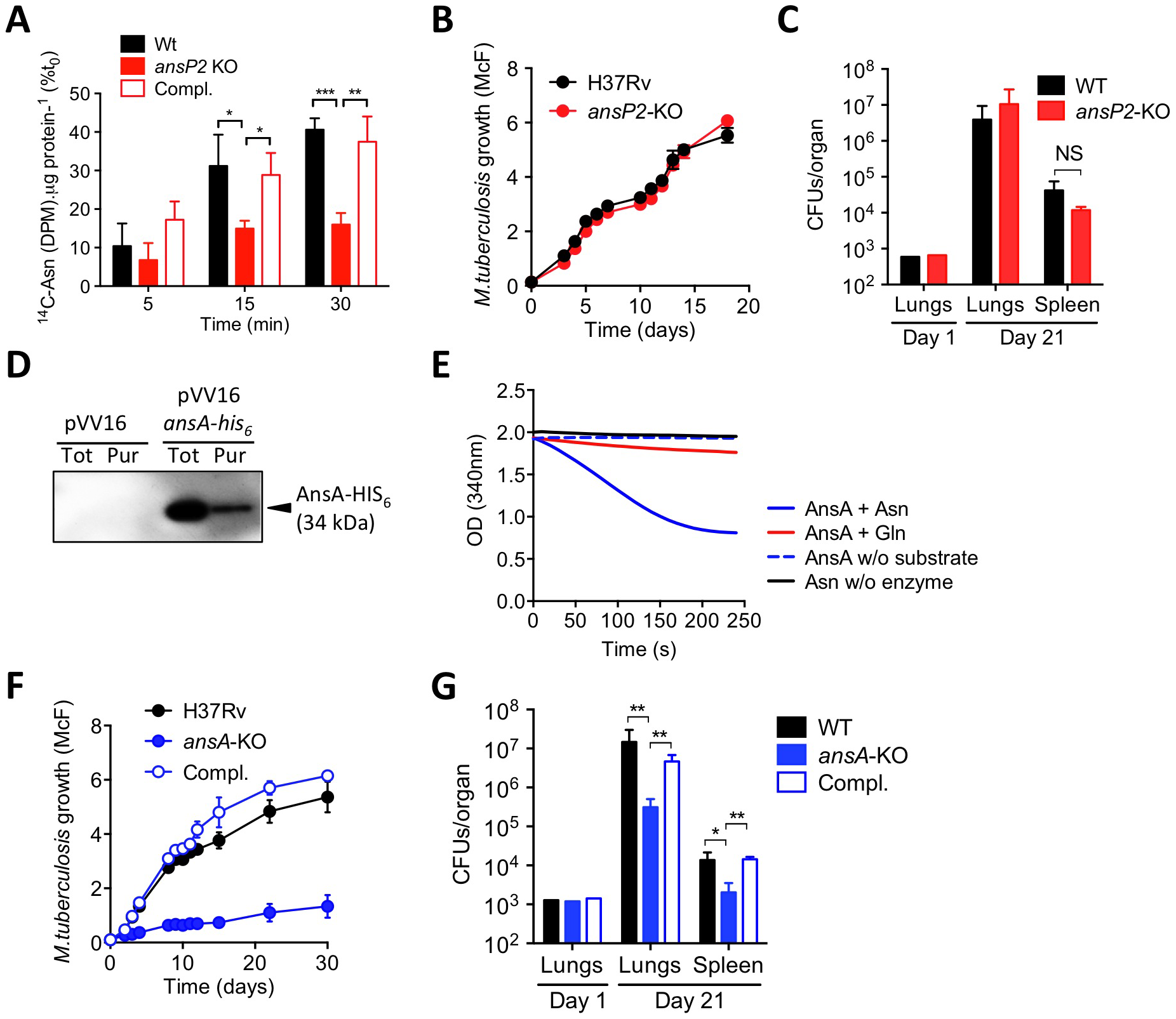 The function and <i>in vivo</i> relevance of AnsP2 and AnsA in asparagine utilization in <i>M. tuberculosis</i>.