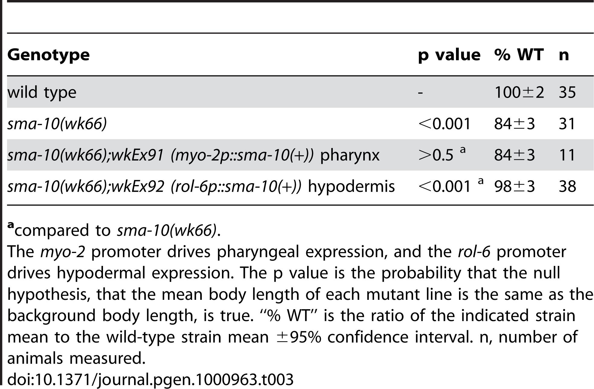 Hypodermal <i>sma-10</i> expression rescues the body size defect of <i>sma-10(lf)</i> animals.