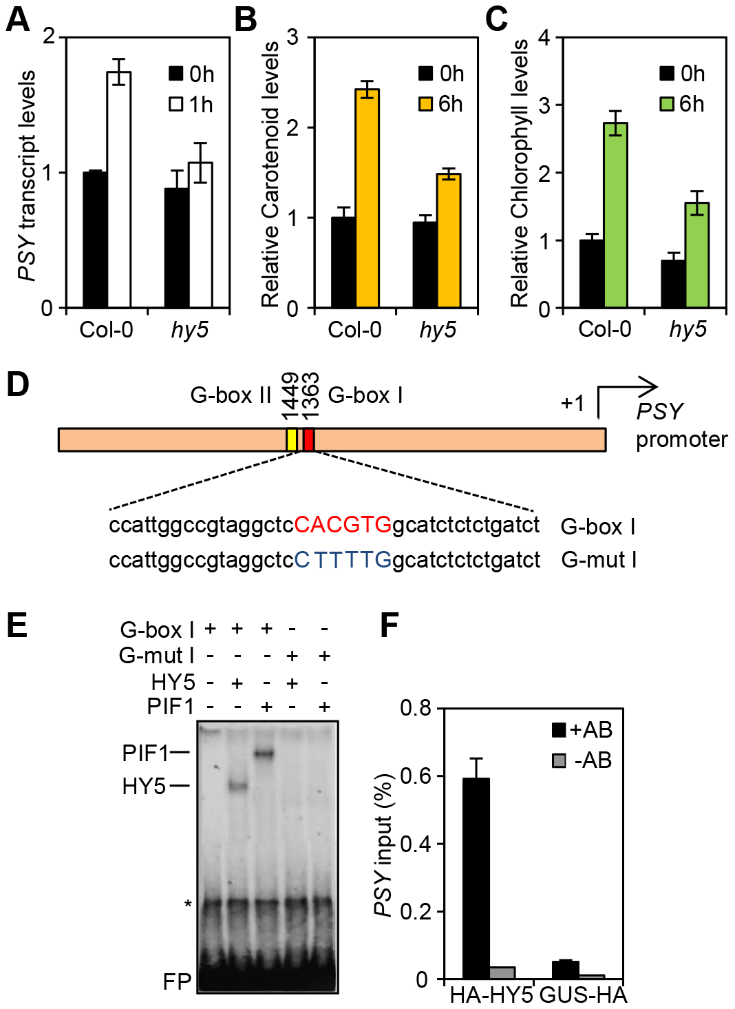 HY5 is a positive regulator of carotenoid and chlorophyll biosynthesis and controls <i>PSY</i> gene expression by promoter binding.