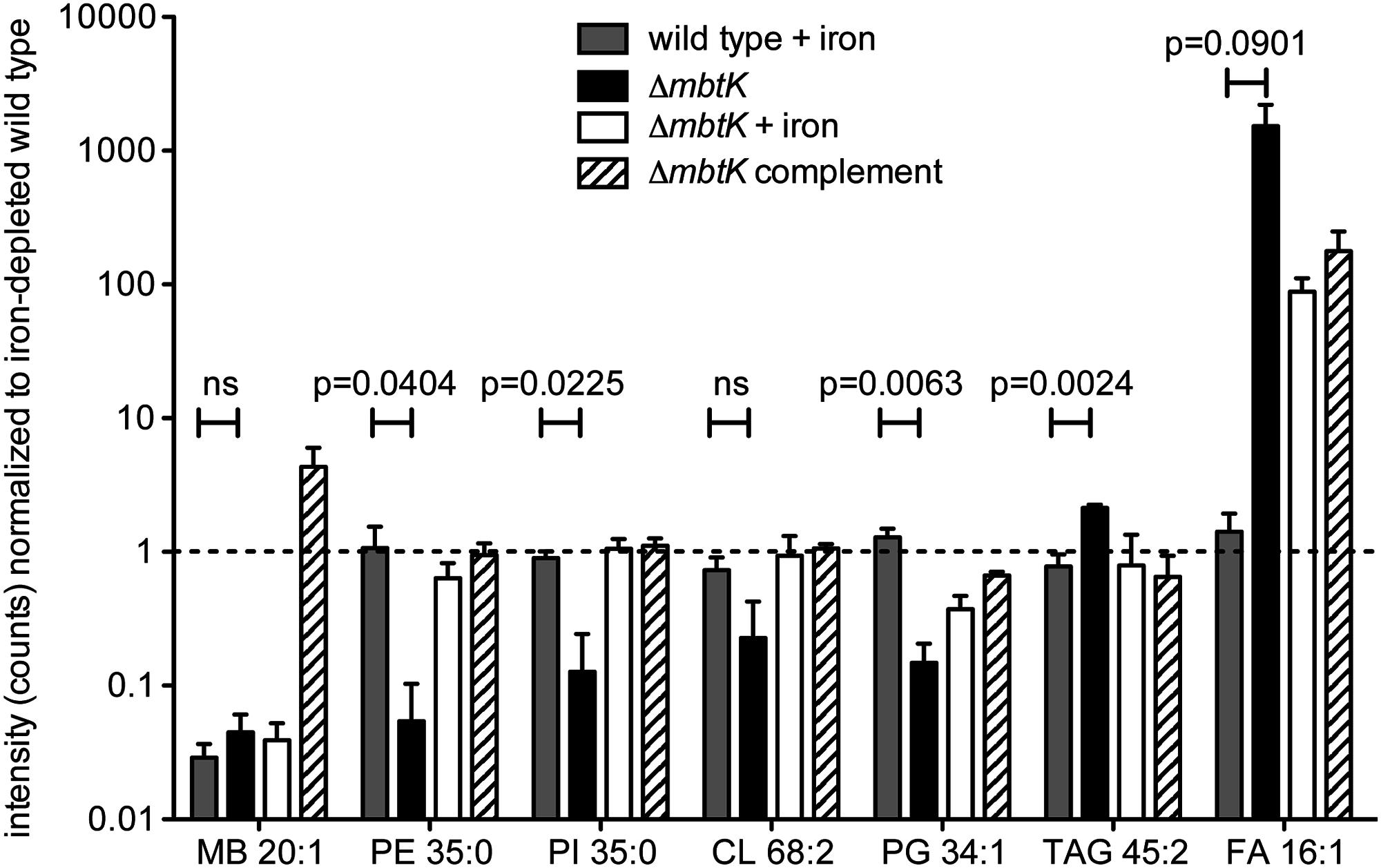 <i>mbtK</i> deletion decreases phospholipid abundance during iron starvation.