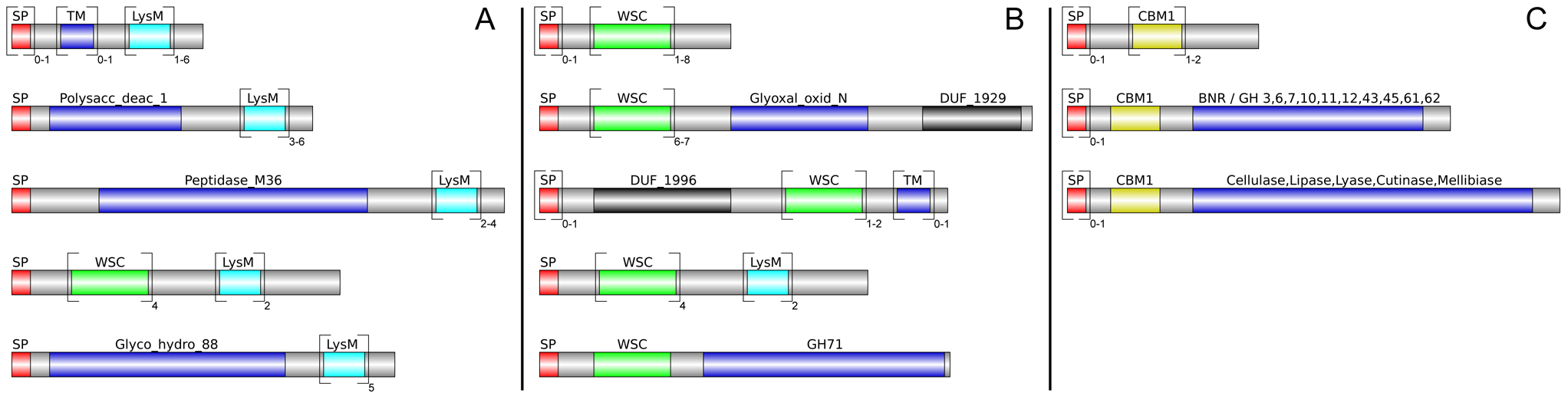 Different architecture of <i>P. indica</i> LysM and WSC containing proteins.