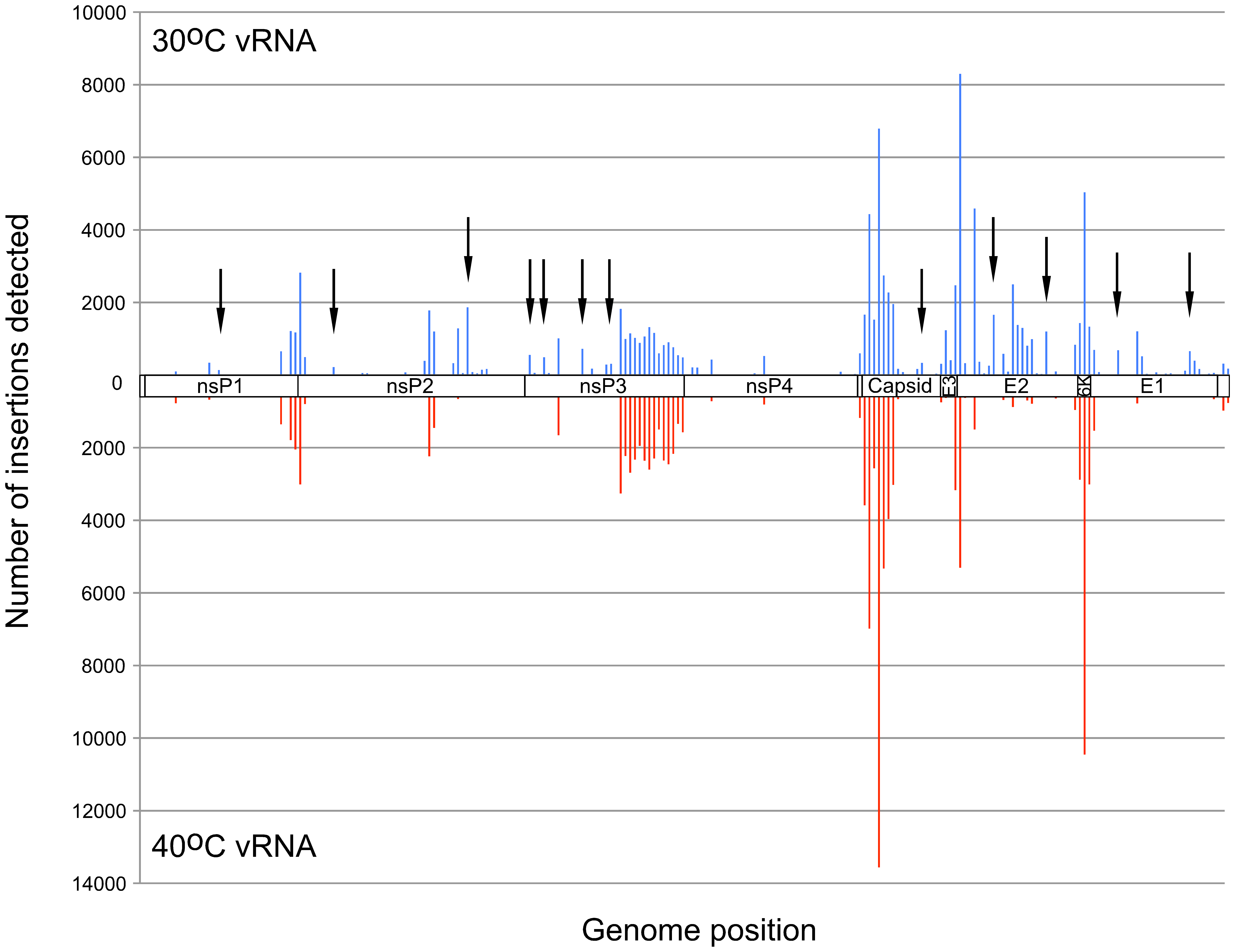Frequency of insertion sites found in vRNAs of virus propagated at 30°C or 40°C.