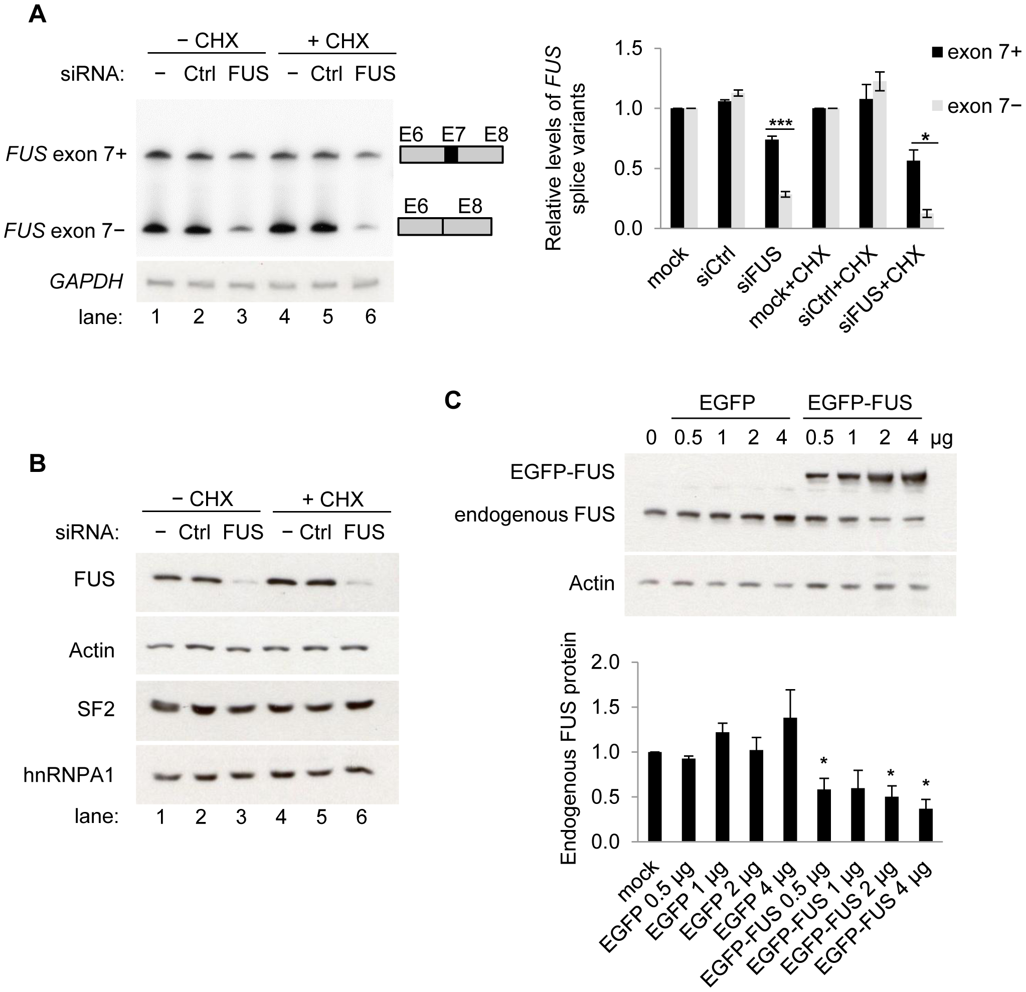 FUS represses exon 7 of the endogenous <i>FUS</i> pre-mRNA and autoregulates its own protein levels.