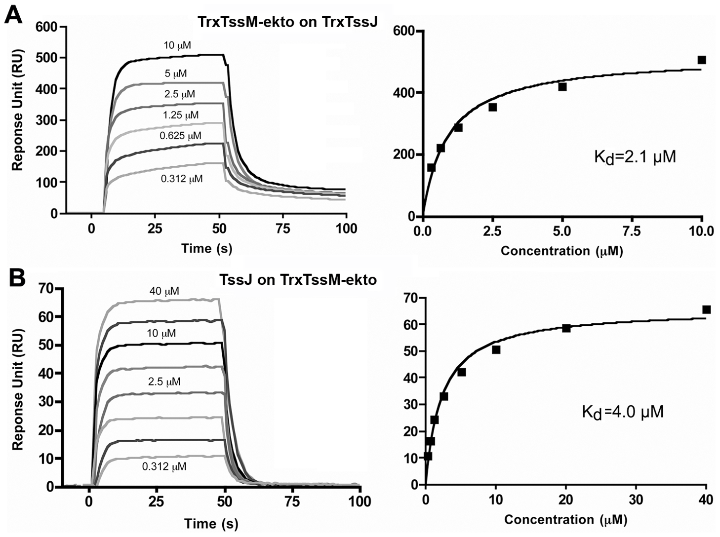 Measure of the interaction between TssM-ekto and TssJ by Surface Plasmon Resonance.