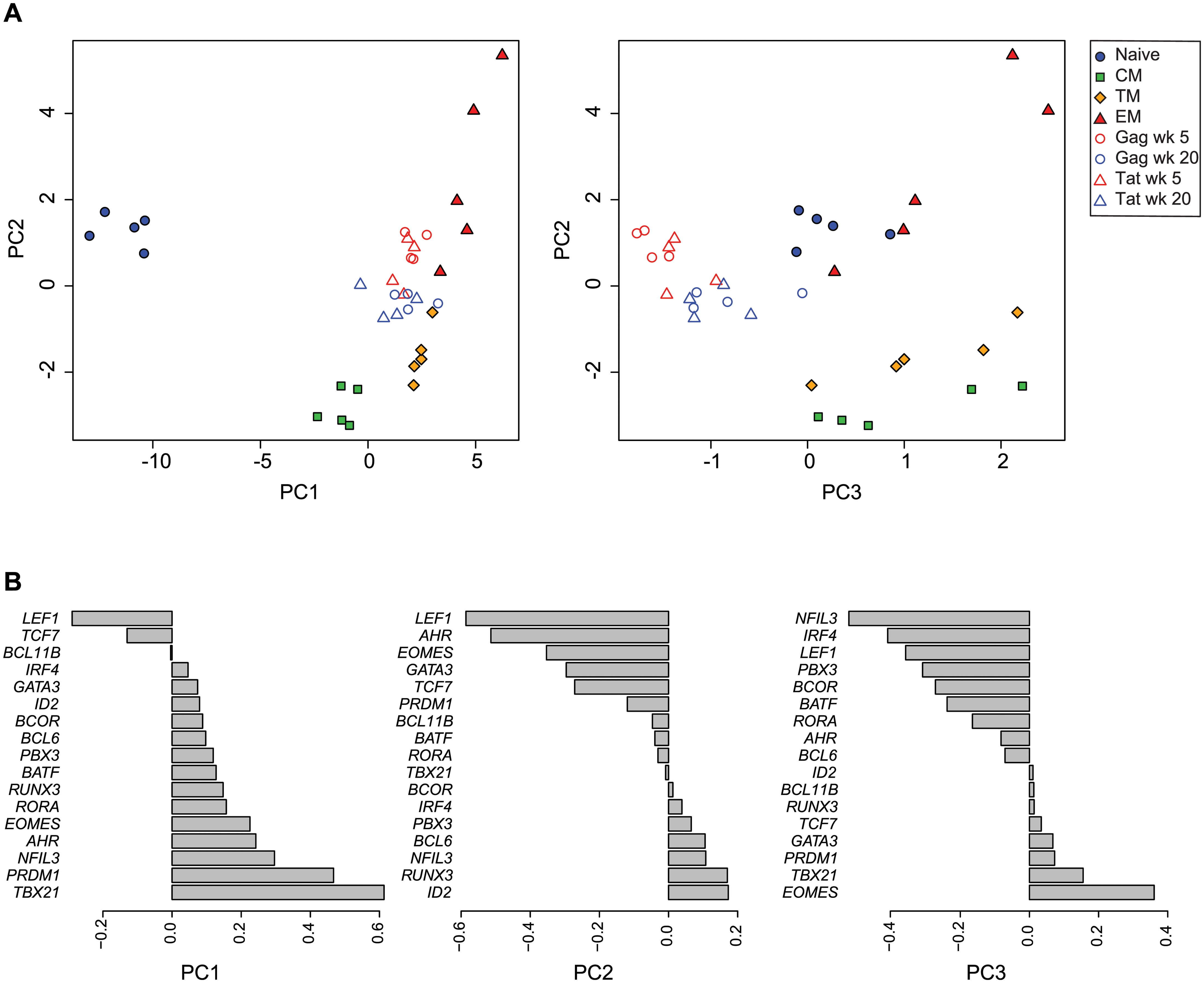 Principal component analysis of transcription factor expression profiles from SIV-specific MHC tetramer-sorted CD8<sup>+</sup> T cells and sorted CD8<sup>+</sup> T cell subsets.