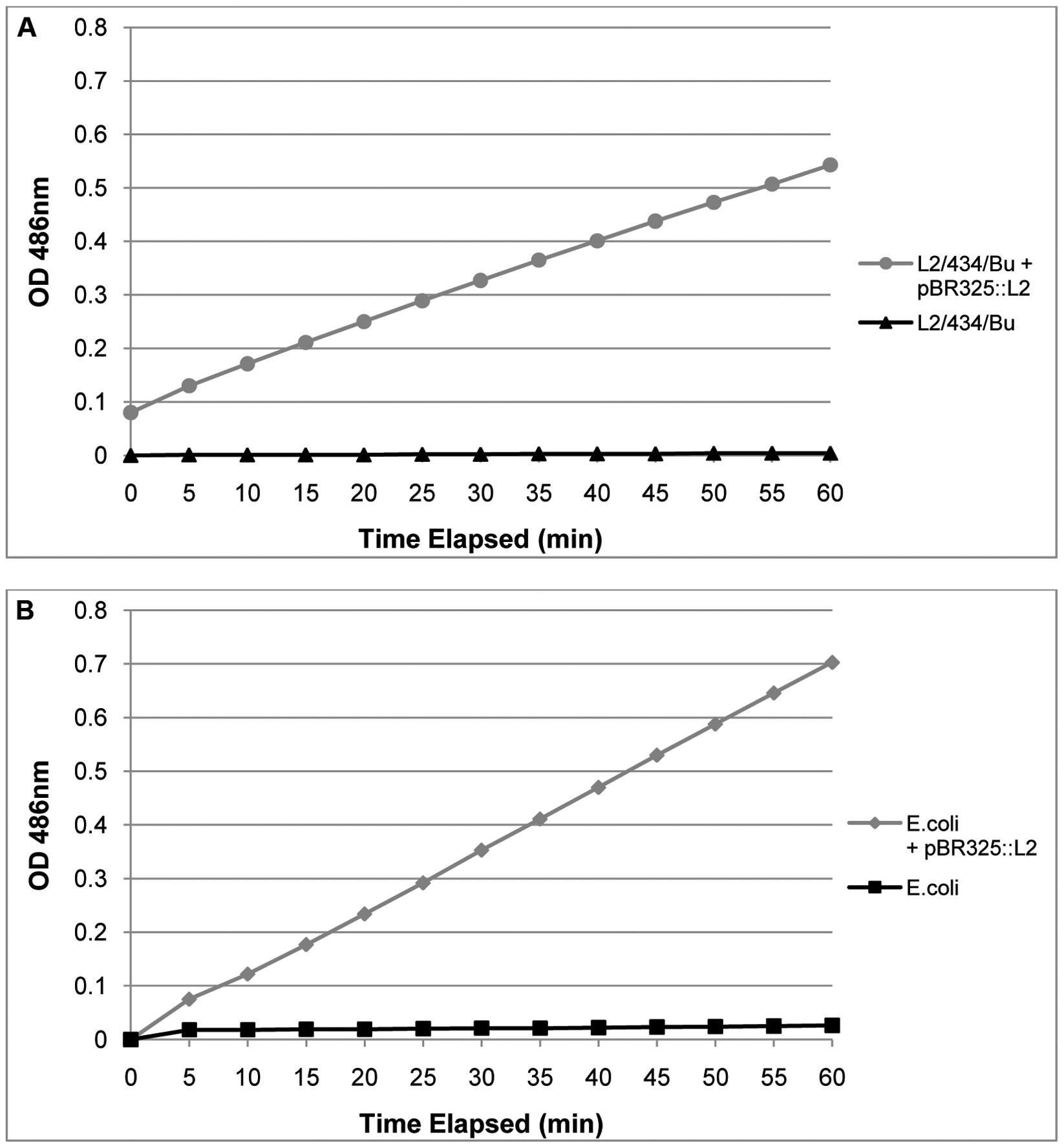 Purified, transformed RBs have β – lactamase activity.
