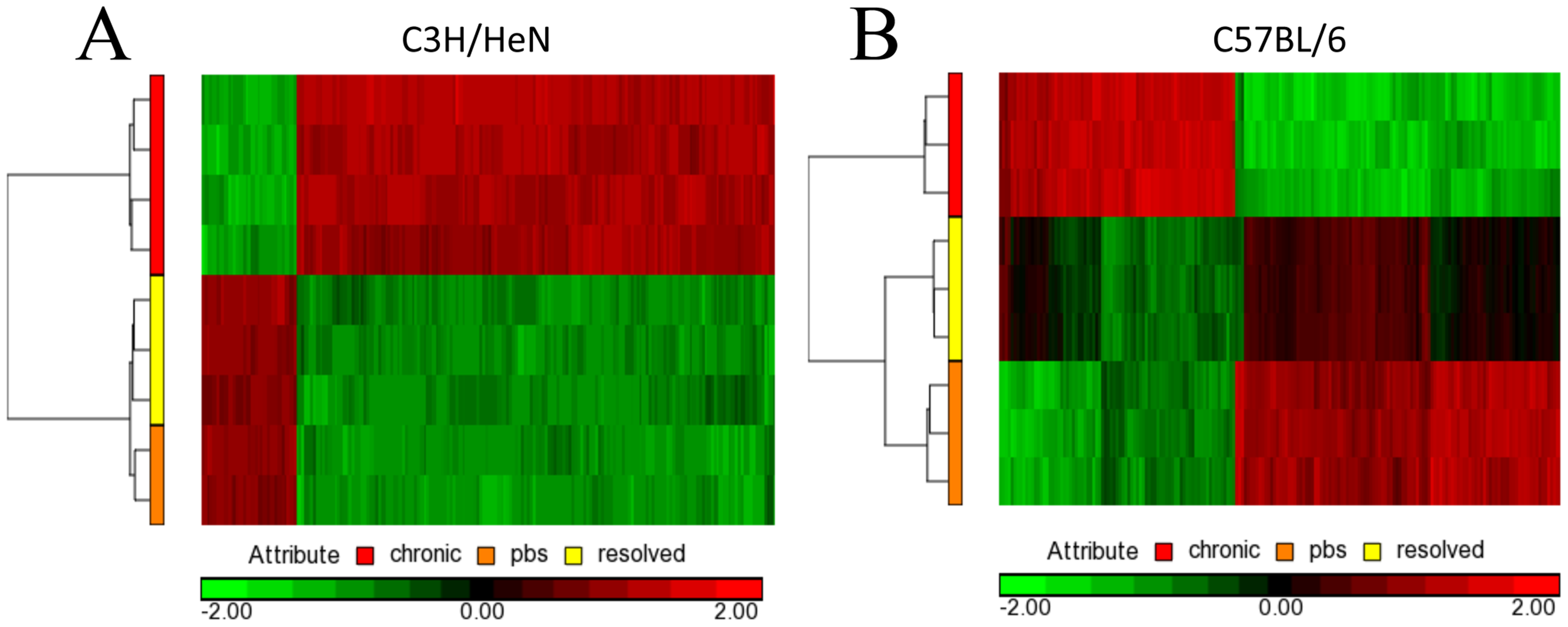 Microarray gene changes for C3H/HeN and C57BL/6J bladders.