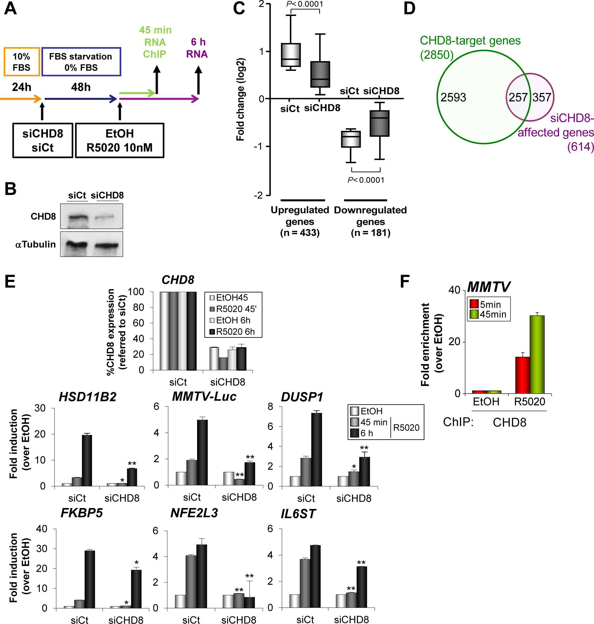 CHD8 is required for progesterone-dependent gene regulation.