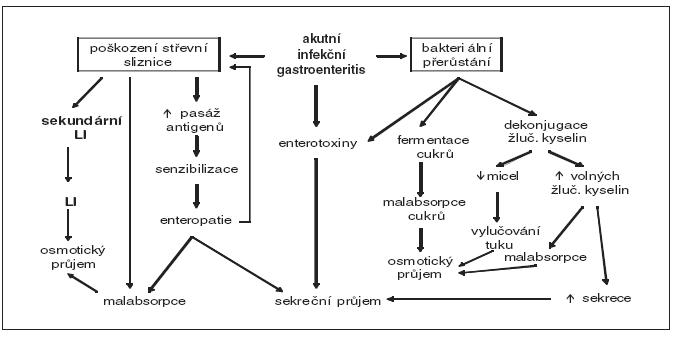 Schéma 1. Možné důsledky akutní gastroenteritidy [13].