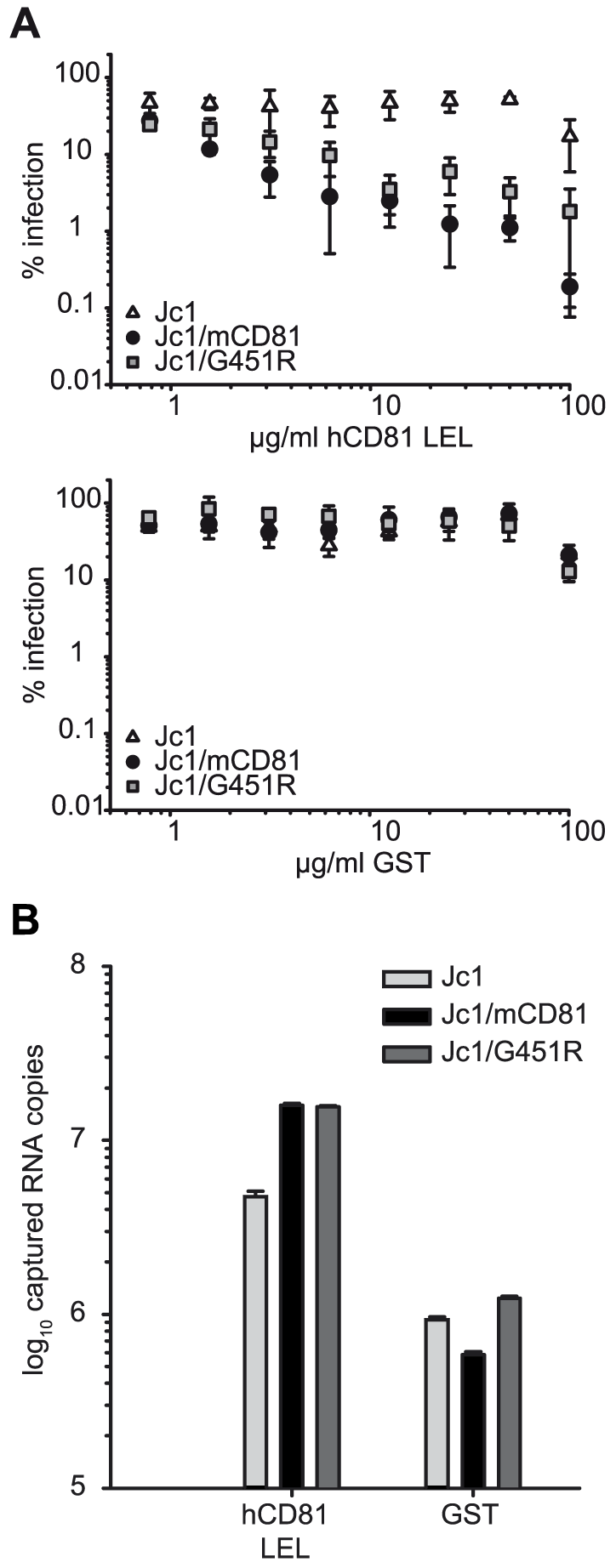 Interaction of HCV wildtype and mutant glycoproteins with recombinant CD81.