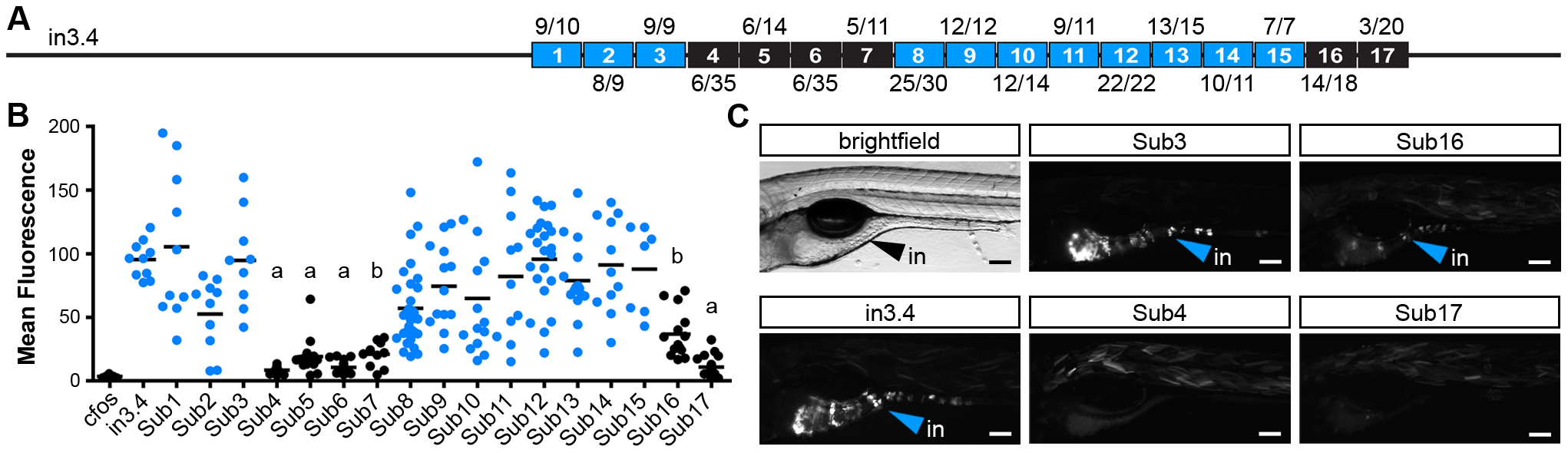 Site-directed mutagenesis defines DNA motifs required for intestinal expression.