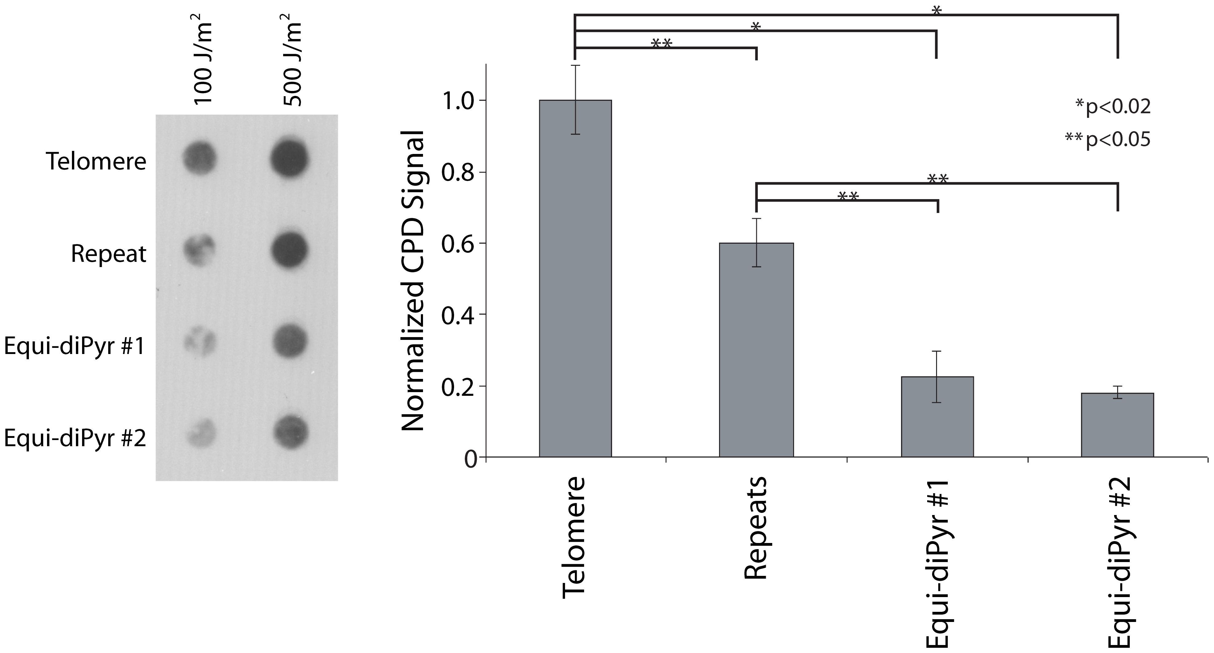 Repeatedness <i>per se</i> sensitizes telomeres to UV.