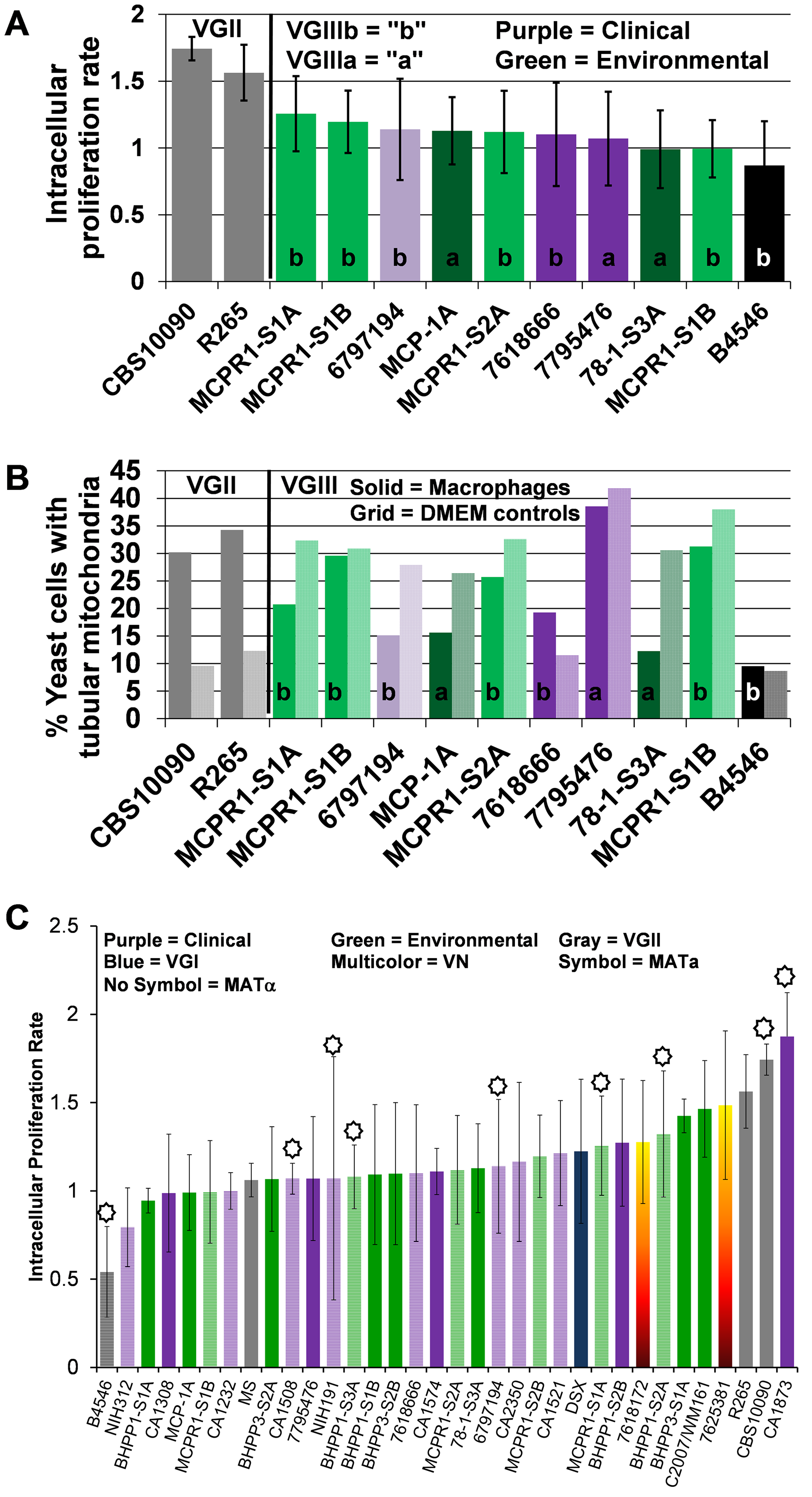 Intracellular proliferation rates (IPR) illustrate moderate proliferation levels and suggest mitochondrial tubularization is decoupled from IPR in macrophages for <i>C. gattii</i> VGIII isolates.