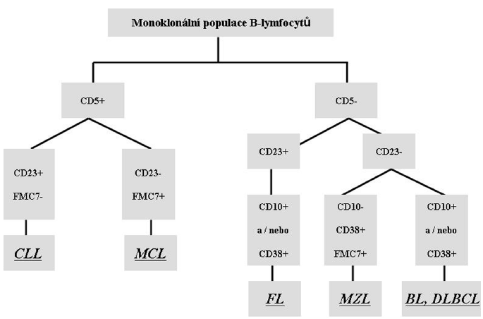Zjednodušené schéma imunofenotypizace nejčastějších B-NHL. V případě suspekce na B-lymfoproliferativní onemocnění posuzujeme expresi B-lymfocytárních znaků (obvykle CD19, CD20, CD79 aj.) a pokud se jedná o nádorový proces ze zralých B-lymfocytů, je zásadní rovněž průkaz klonality pomocí vyšetření lehkých povrchových řetězců imunoglobulinů kappa a lambda. Prokážeme-li ve vzorku monoklonální populaci B-lymfocytů, díky dalším vyšetřovaným znakům můžeme posoudit, o kterů B-lymfom se může jednat. <em>CLL = chronická lymfocytická leukémie; MCL = lymfom z buněk pláště; FL = folikulární lymfom; MZL =lymfom marginální zóny; BL = Burkittův lymfom; DLBCL = difúzní velkobuněčný B lymfom.</em>