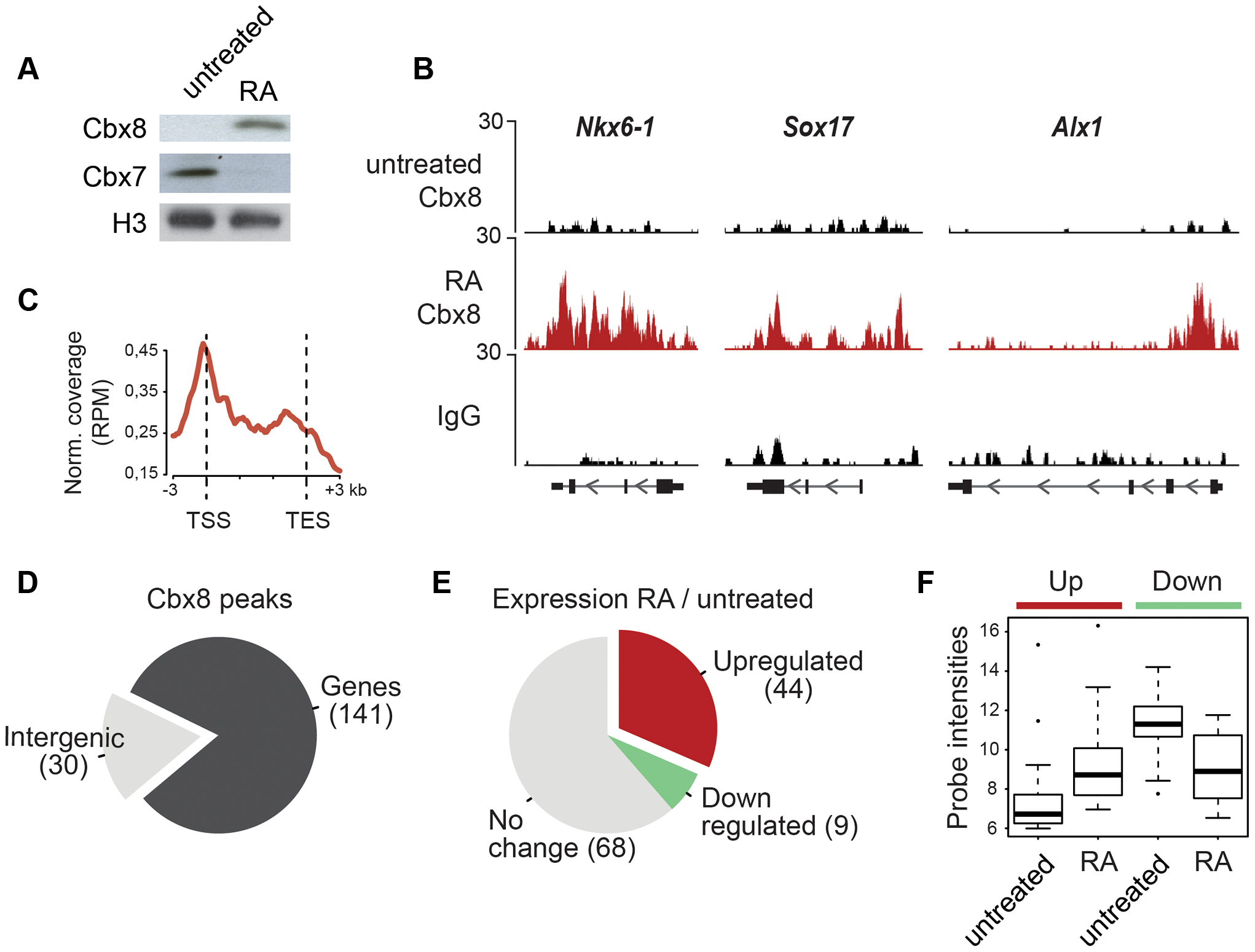 Cbx8 is upregulated and recruited to activated genes during ES cell differentiation.