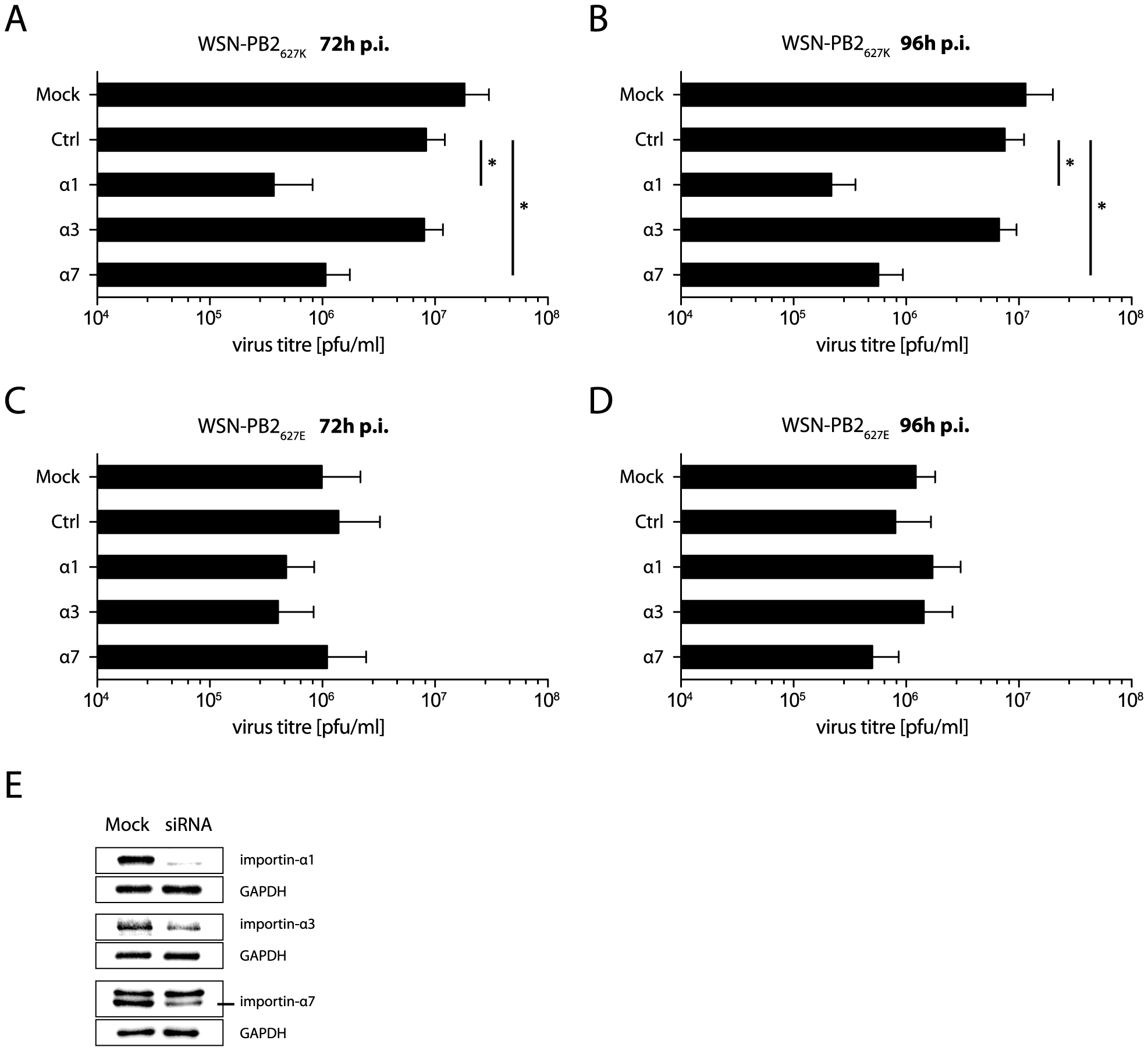 Human- but not avian-like virus growth depends on importin-α1 and -α7.