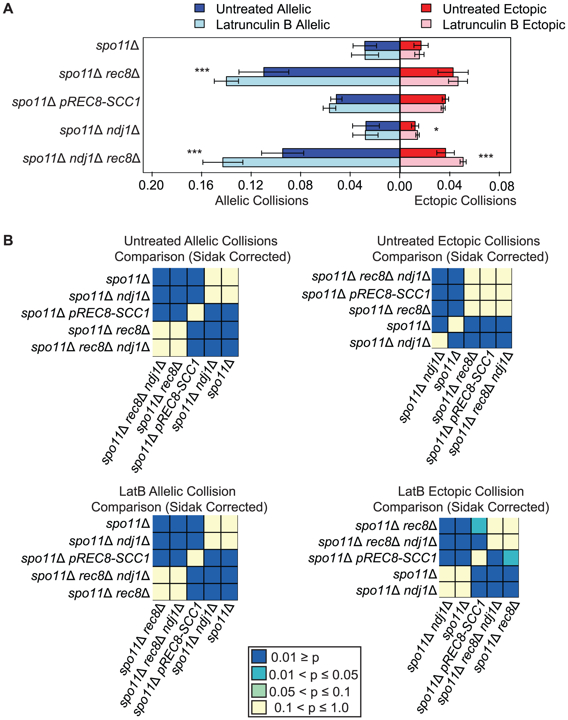 Elevated levels of nonspecific collisions in <i>rec8</i>Δ mutants do not require recombination initiation.