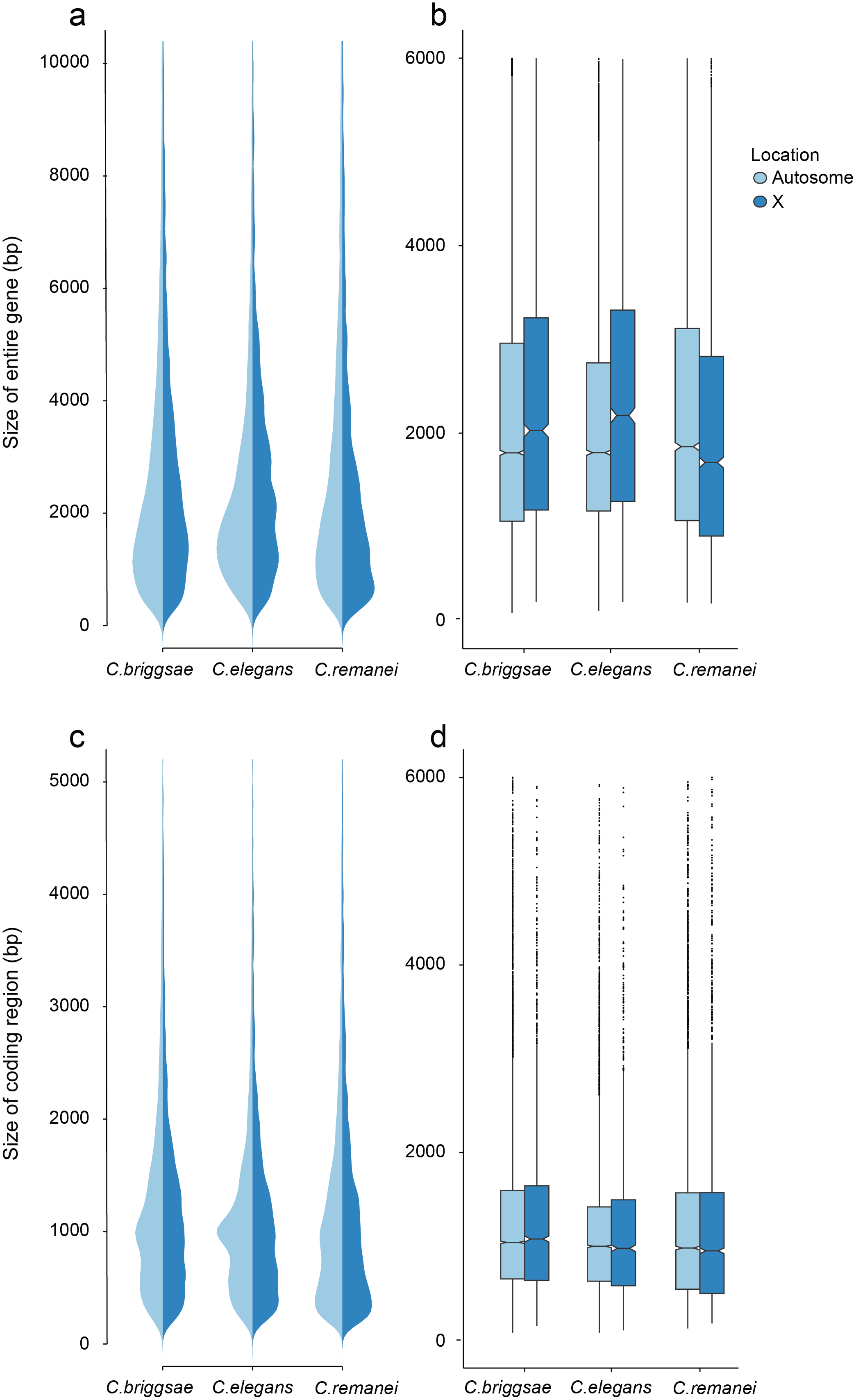 Differences in total gene size (introns and exons) versus protein coding size (exons) in <i>C. elegans</i>, <i>C. briggsae</i> and <i>C. remanei</i>.