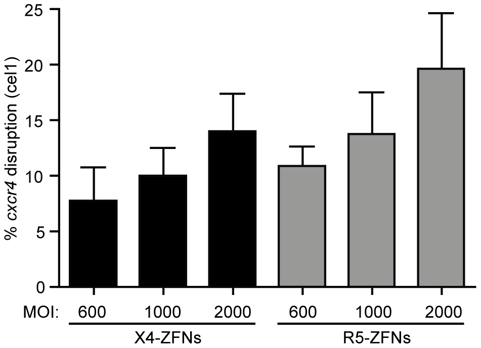ZFNs can efficiently disrupt <i>ccr5</i> and <i>cxcr4</i> in rhesus macaque CD4+ T cells.