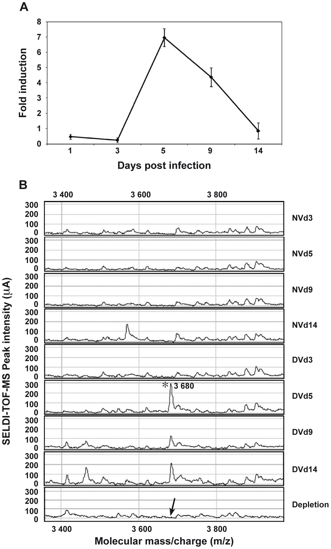 AAEL000598 mRNA expression and detection of the 3.680-kDa peptide in infected salivary glands.