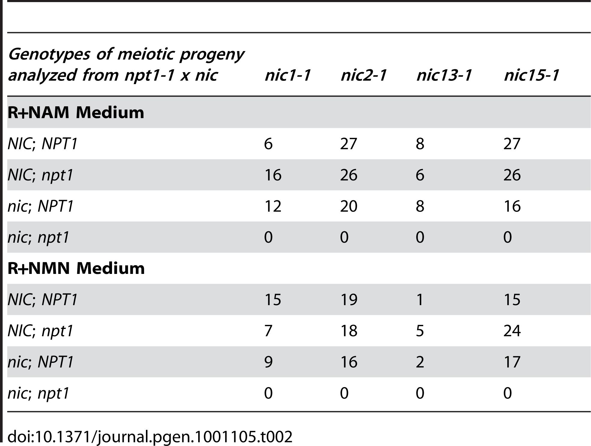 Progeny analysis from crosses between <i>npt1-1</i> and <i>nic</i> mutant strains.