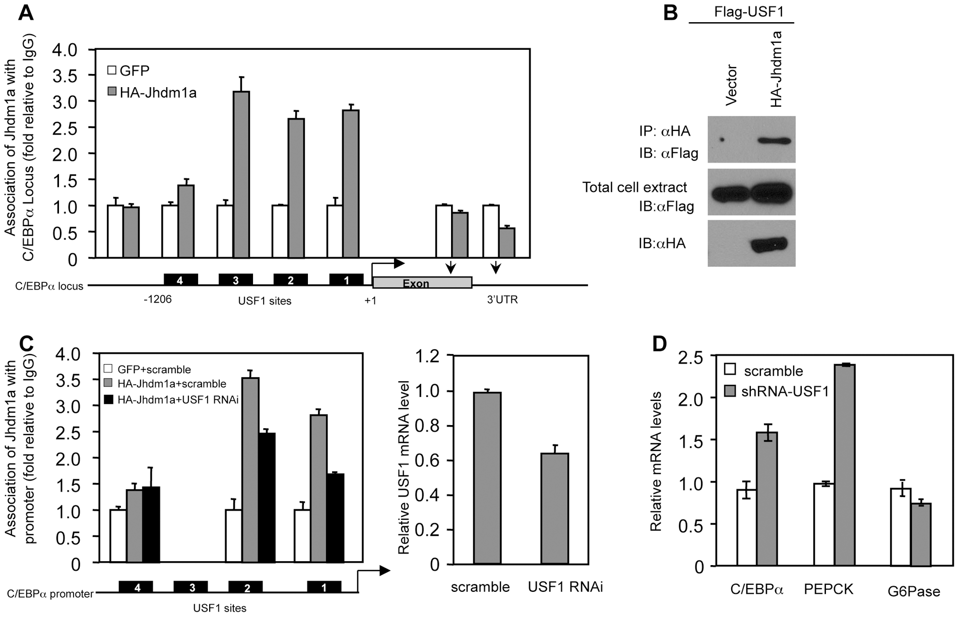 Suppression of C/EBPα expression by Jhdm1a is mediated by USF1.