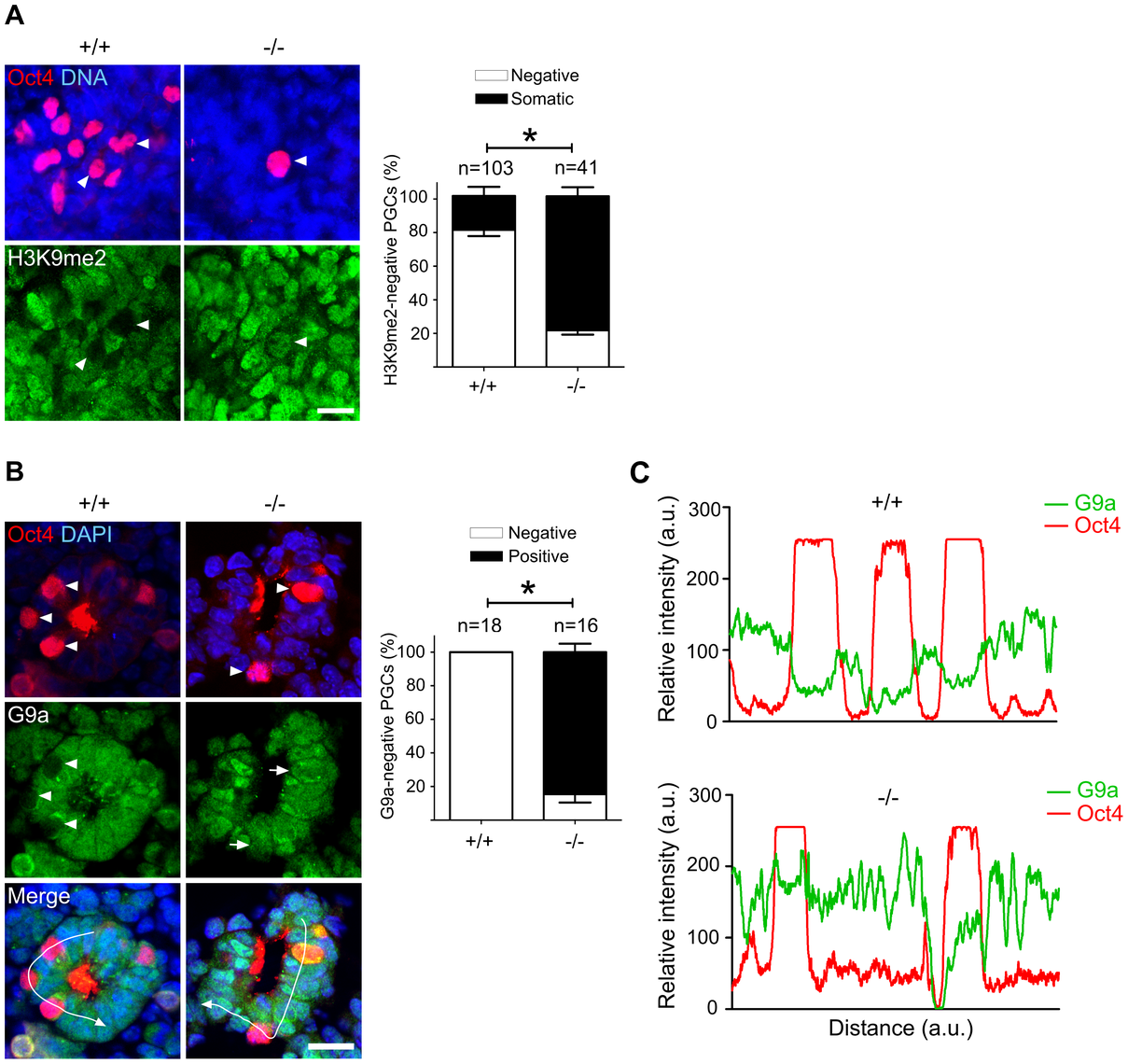 Majority of Mad2l2 deficient PGCs fail to downregulate H3K9me2.