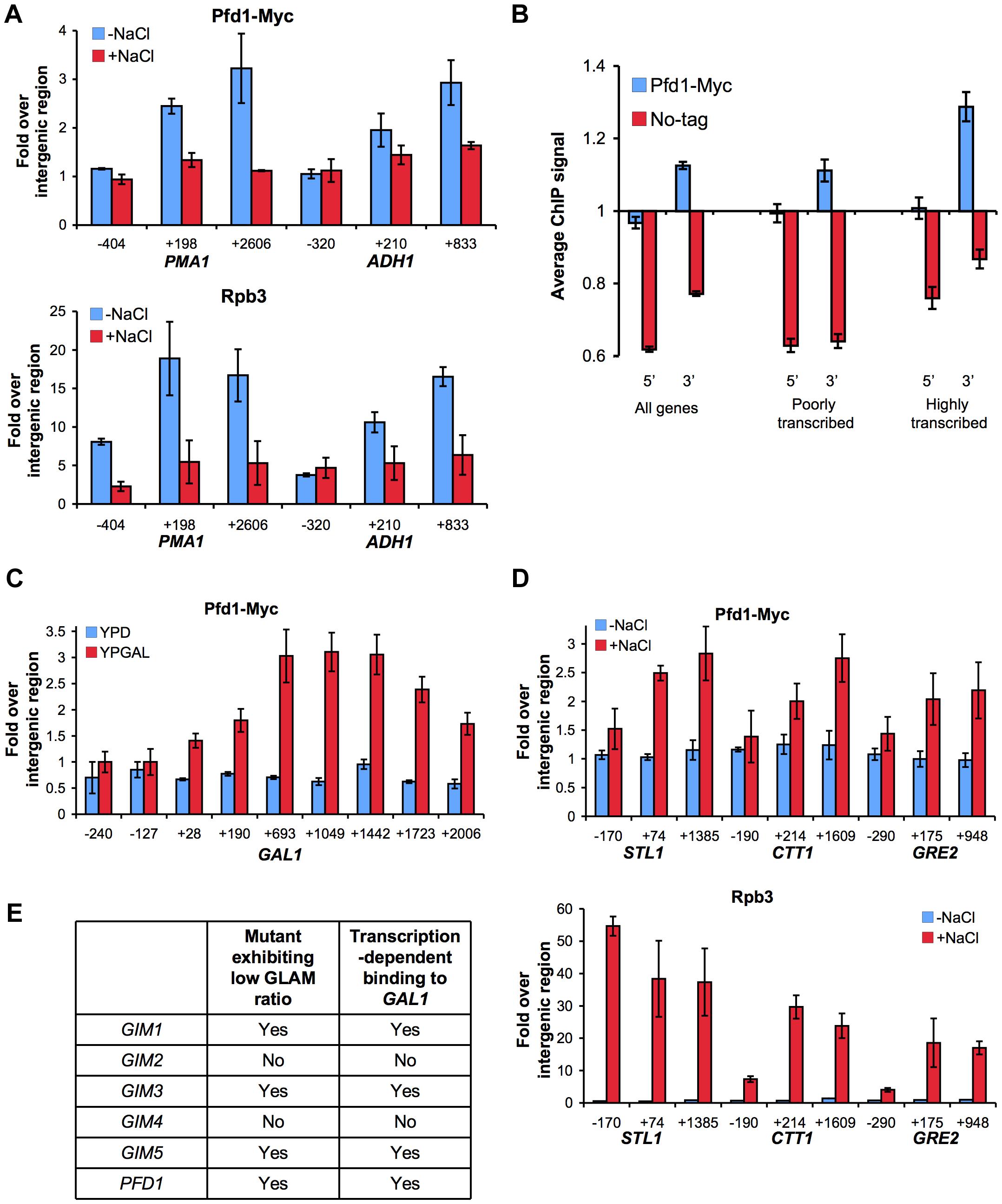 Prefoldin binds the transcribed region of active genes.