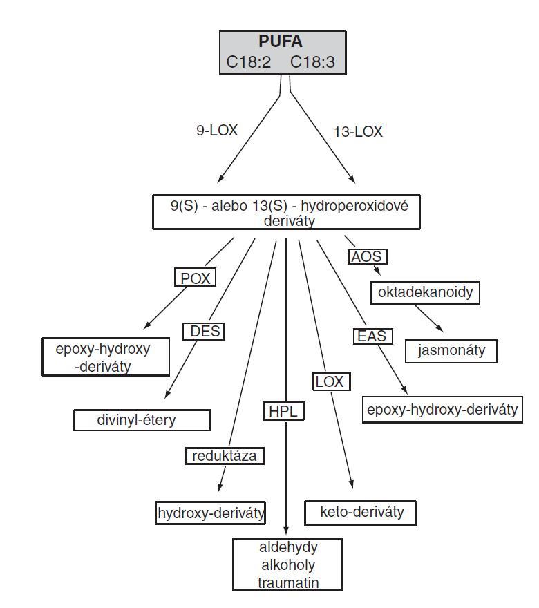 Lipoxygenázová (oktadekánová) cesta (PUFA – polynenasýtené mastné kyseliny, POX – peroxygenáza, DES – divinylétersyntáza, HPL – hydroperoxidlyáza, LOX – lipoxygenáza, EAS – epoxyalkoholsyntáza, AOS –  allenoxidsyntáza)