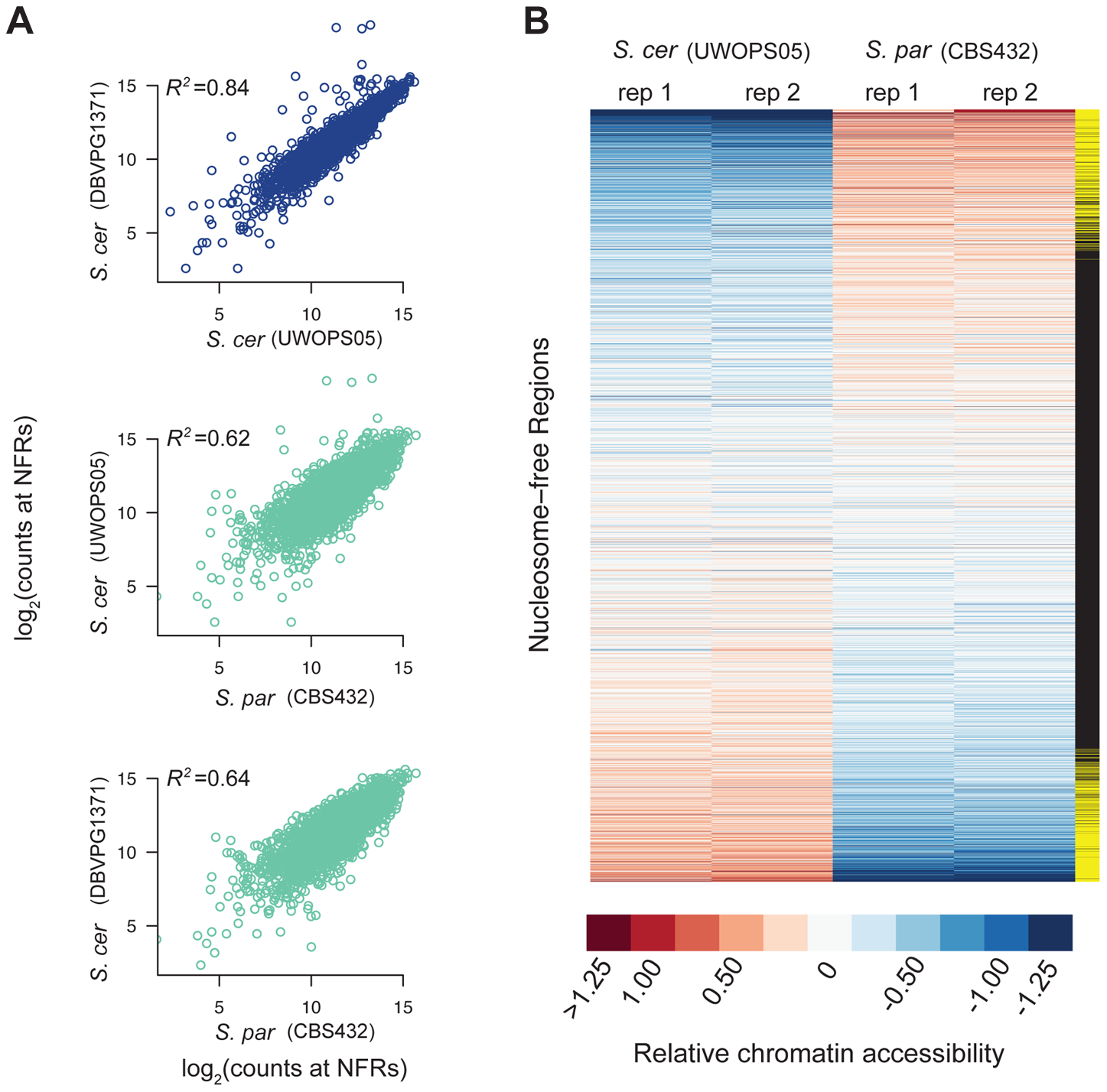 Patterns of chromatin accessibility within and between <i>S. cerevisiae</i> and <i>S. paradoxus</i>.
