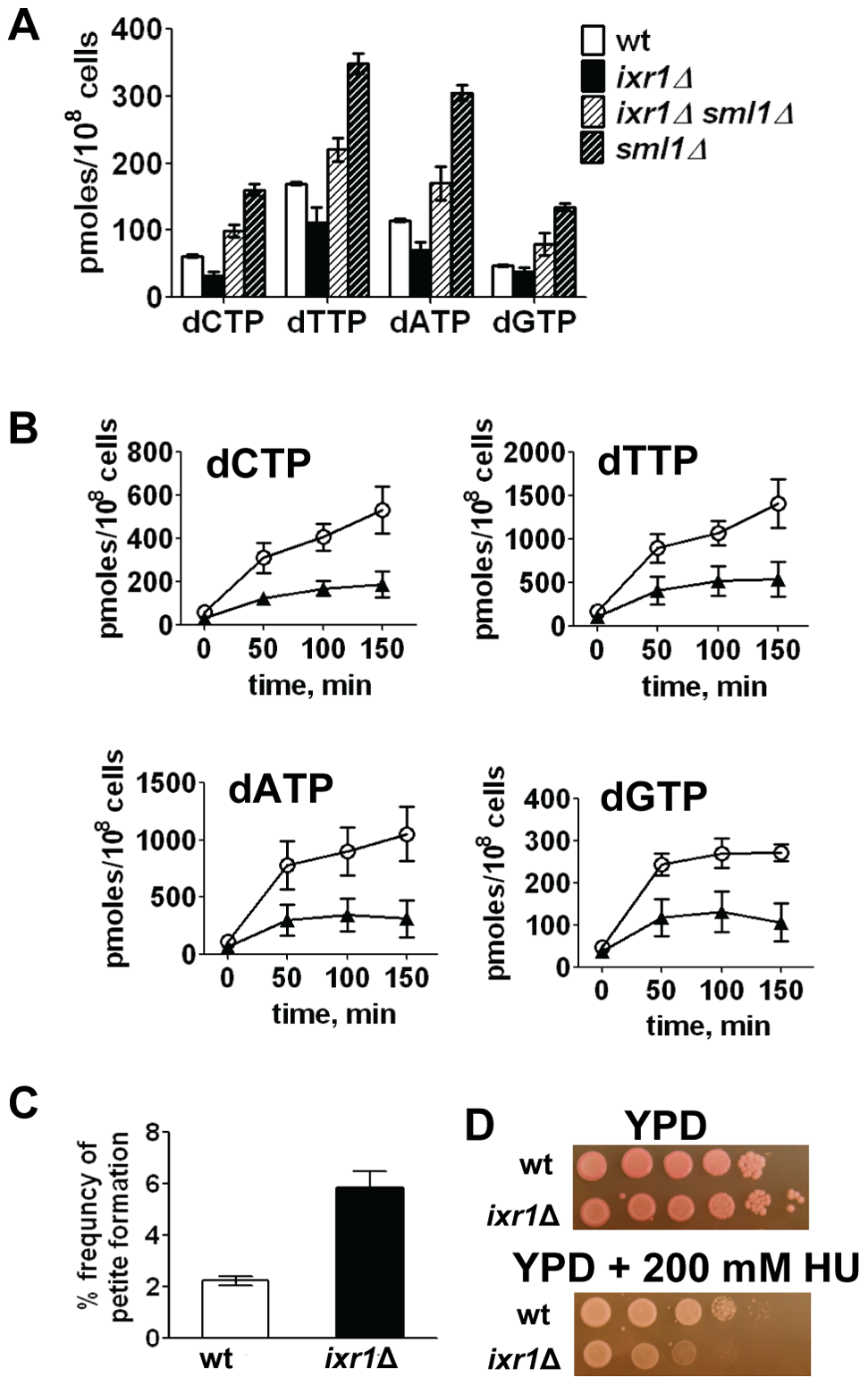 Deletion of <i>IXR1</i> leads to decreased dNTP levels.
