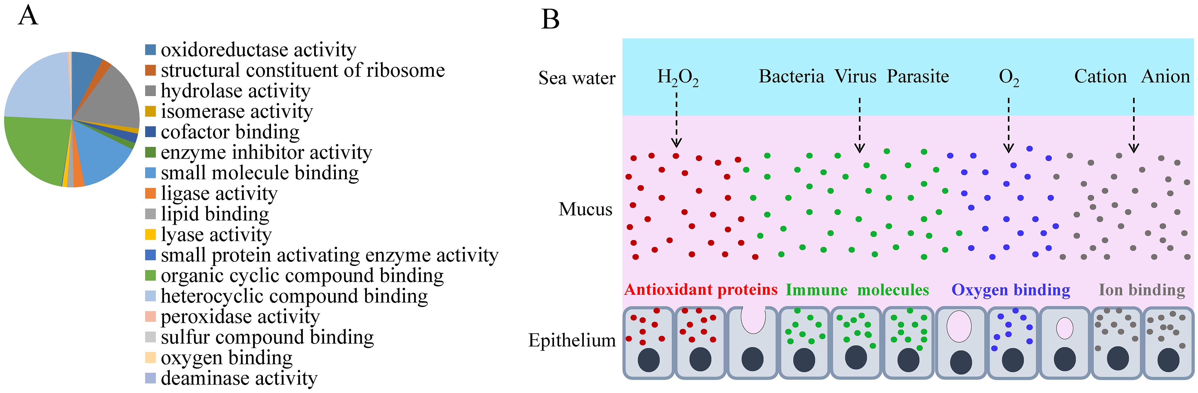 Skin mucus proteins are overexpressed in air-exposed <i>L</i>. <i>crocea</i>.