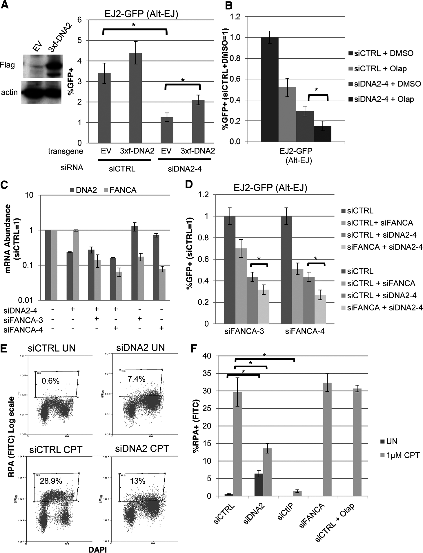 DNA2 has distinct effects on Alt-EJ and end resection, compared to FANCA and PARP.