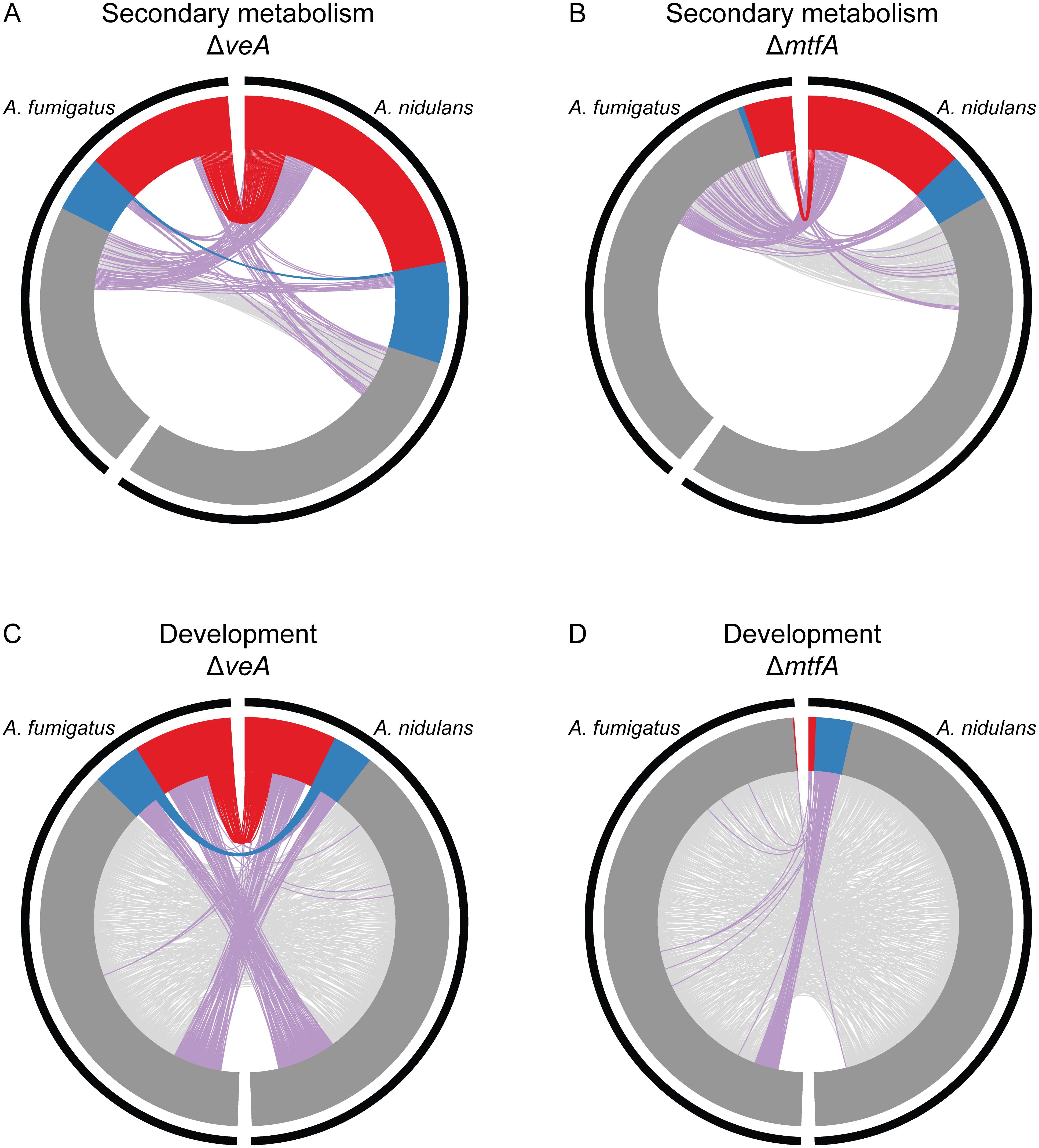 Orthology of SM and development genes differentially expressed in Δ<i>veA</i> and Δ<i>mtfA</i> relative to wild type in <i>A</i>. <i>fumigatus</i> and <i>A</i>. <i>nidulans</i>.