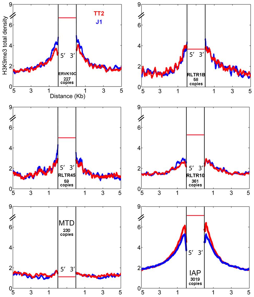 ERV influence on H3K9me3 chromatin.