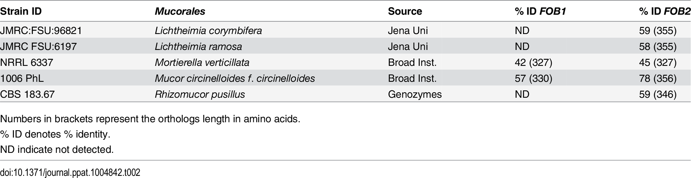 Sequence homology of <i>FOB1/2</i> genes from <i>R</i>. <i>oryzae</i> 99-880 to possible <i>Mucorales</i> orthologs.