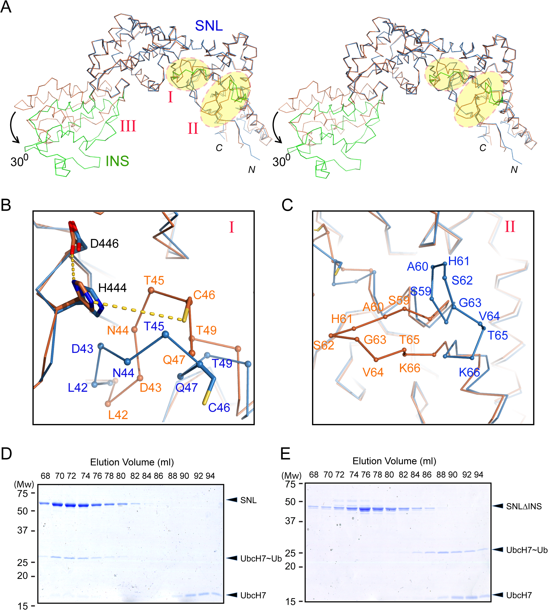 Conformational dynamics of the SNL and INS domains.