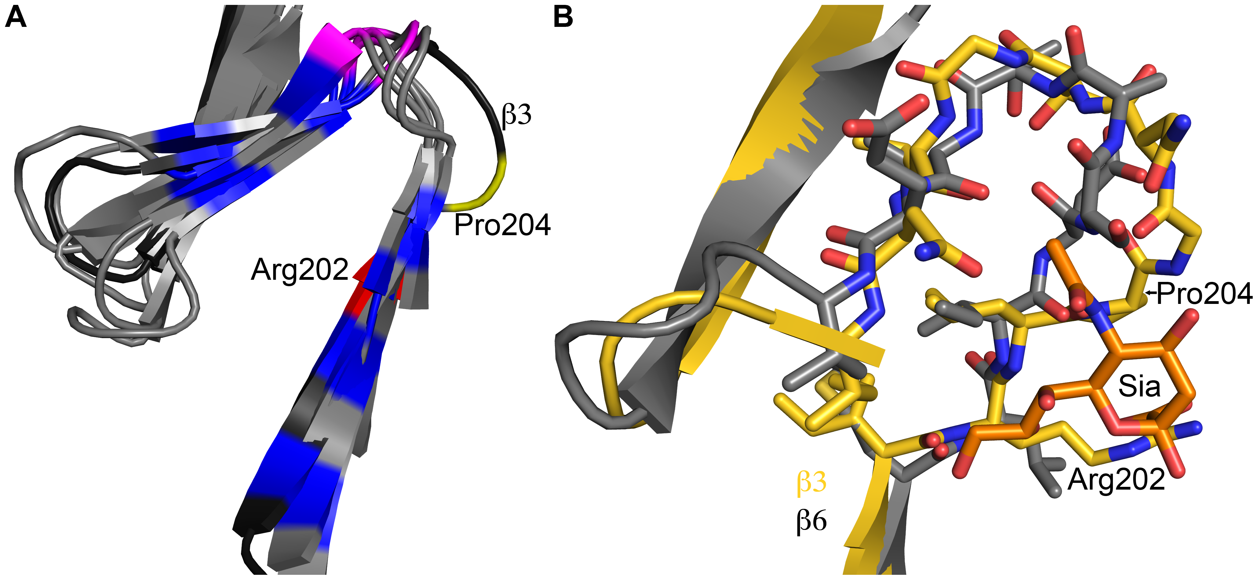 Structural adaption of the binding site.