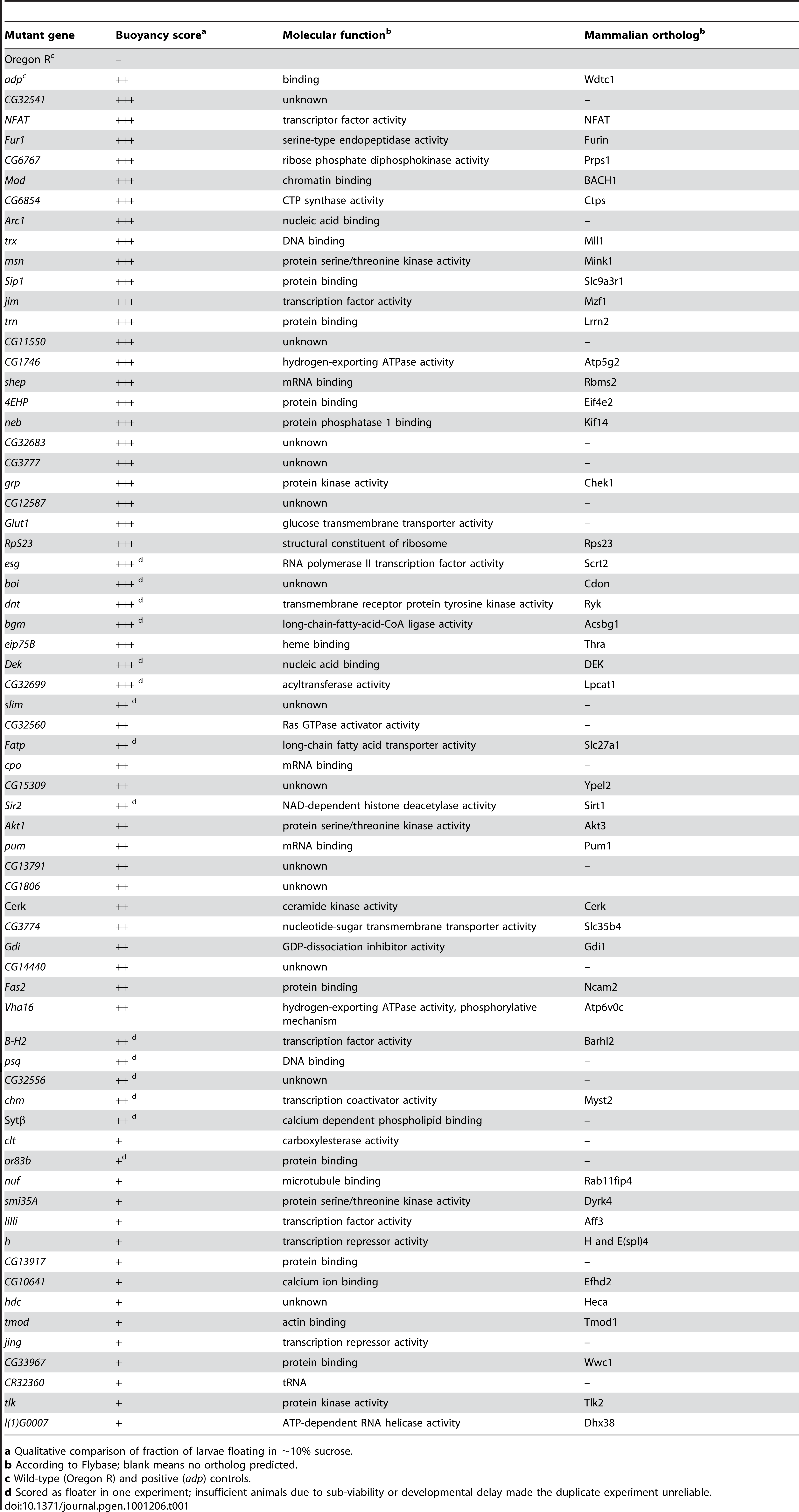 List of mutant Drosophila genes isolated in the floatation screen.