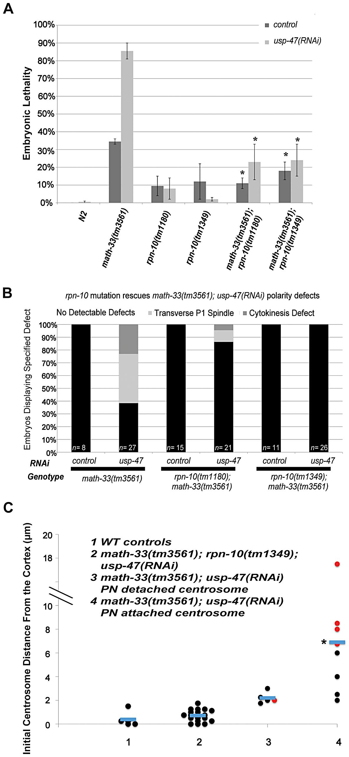 Mutation of <i>rpn-10</i> suppresses lethality and polarity defects in <i>math-33(tm3561); usp-47(RNAi)</i> embryos.