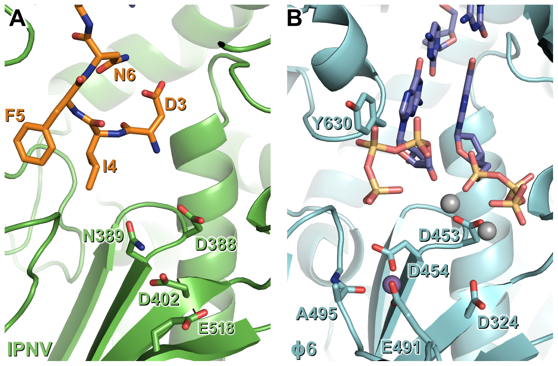 N-terminal tail binding at the active site of IPNV VP1 resembles the nascent daughter strand of a viral polymerase initiation complex.