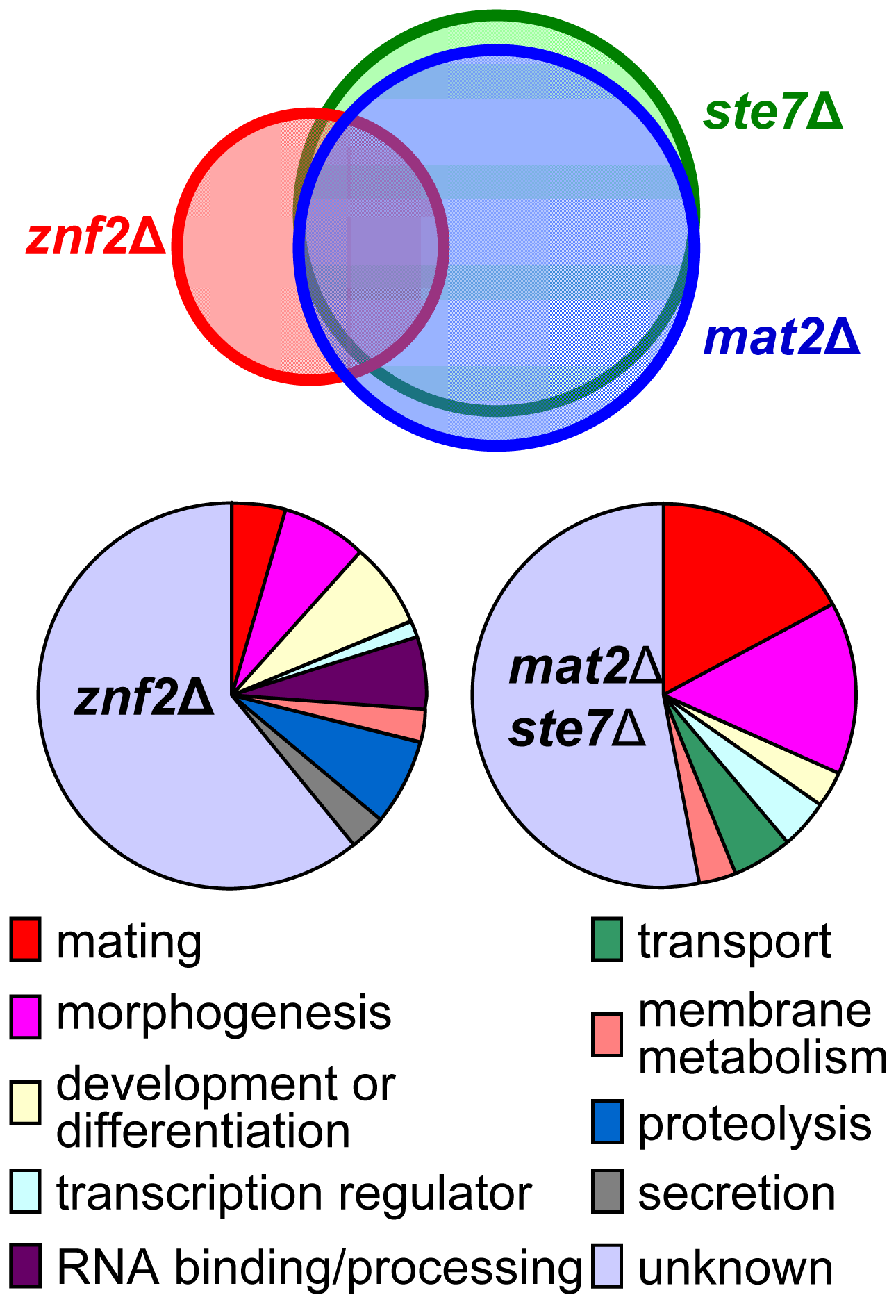 Gene expression profiles of <i>ste7</i>Δ, <i>mat2</i>Δ, and <i>znf2</i>Δ mutants during bilateral mating.