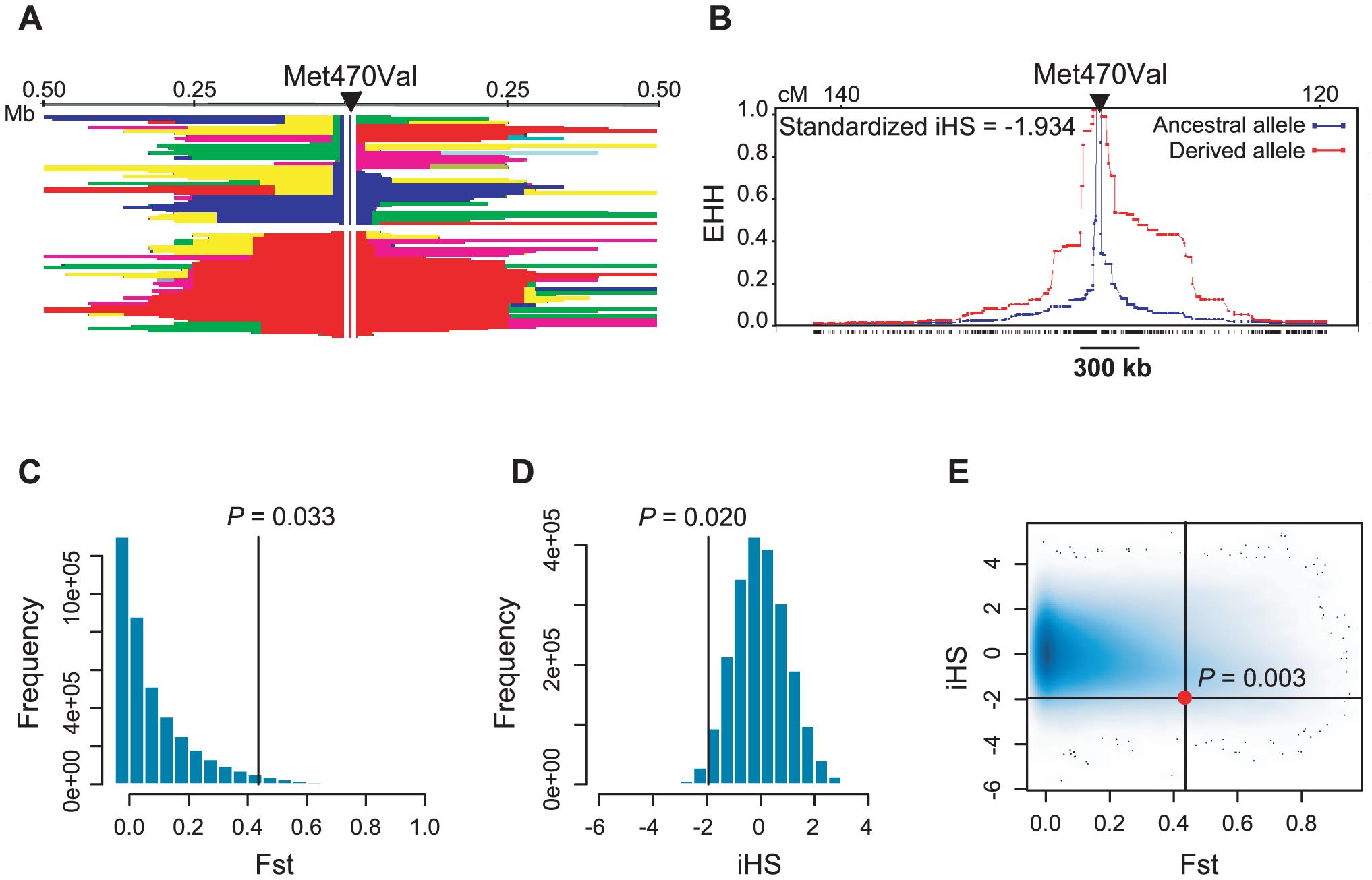 Population genetic parameters of the <i>CFTR</i> Met470Val locus.
