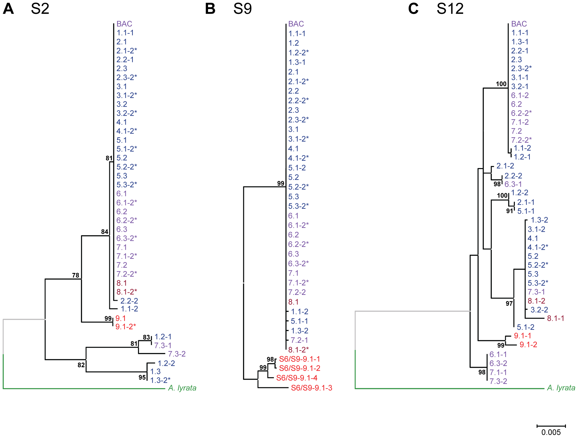 Phylogenetic trees for segments comprising unique sequences in the genomic <i>HMA4</i> region of <i>A. halleri</i>.